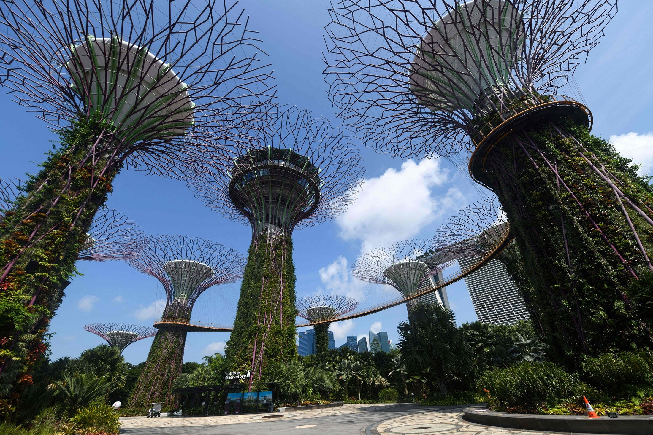 A view of the Supertrees at Gardens by the Bay in Singapore, July 23, 2021. (AFP Photo)
