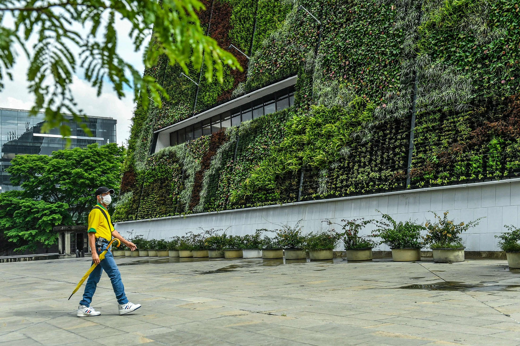 A man walks near the vertical garden of a building at the Alpujarra sector in downtown Medellin, Colombia, June 15, 2021. (AFP Photo)