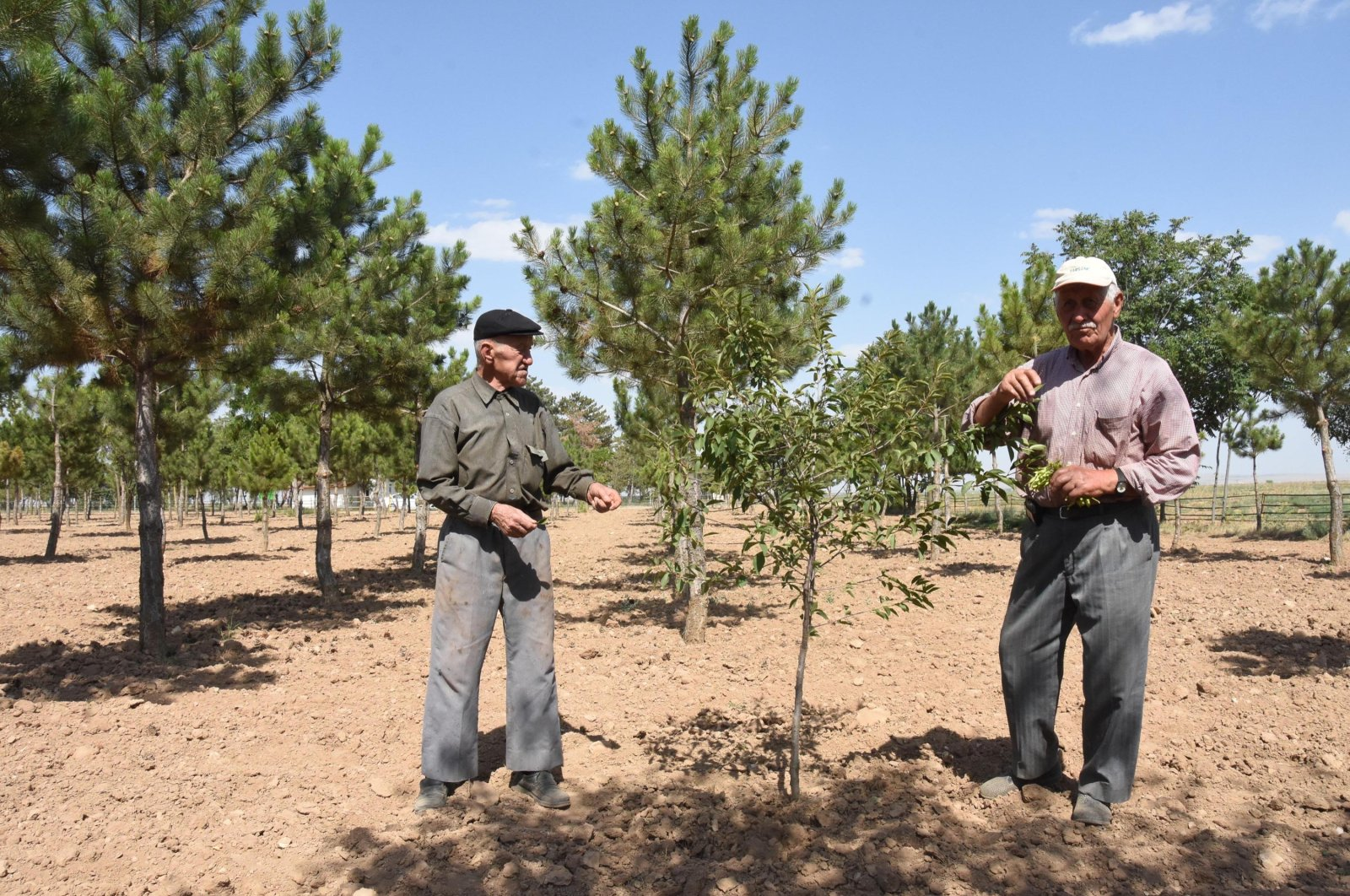 Brothers Ali (L) and Kazım (R) Özkan pose next to trees they planted in Çifteler, Eskişehir, central Turkey, Aug. 2, 2021. (DHA PHOTO)