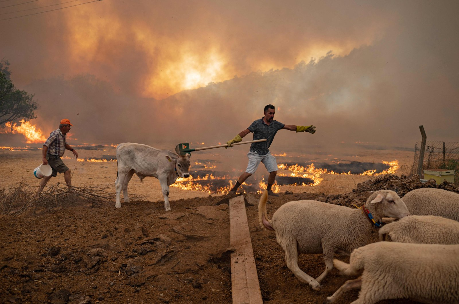 A man walks away with his sheeps from an advancing fire in Marmaris, Muğla, southwestern Turkey, Aug. 2, 2021. (AFP Photo)