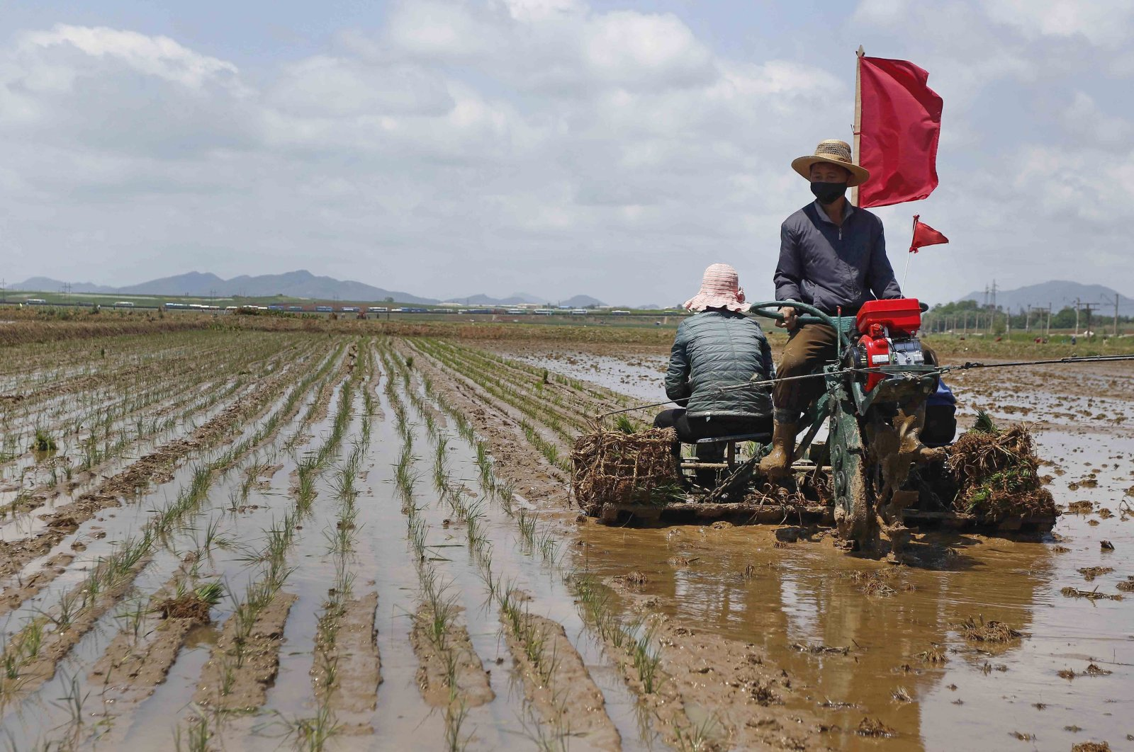 Farmers plant rice at the Namsa Co-op Farm in the Rangnang district in Pyongyang, North Korea, May 25, 2021. (AP Photo)