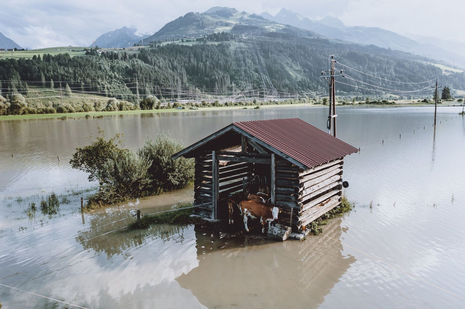 Cows stand in a shed at an overflooded meadow in Kaprun, Austria, July 19, 2021. (AFP Photo)