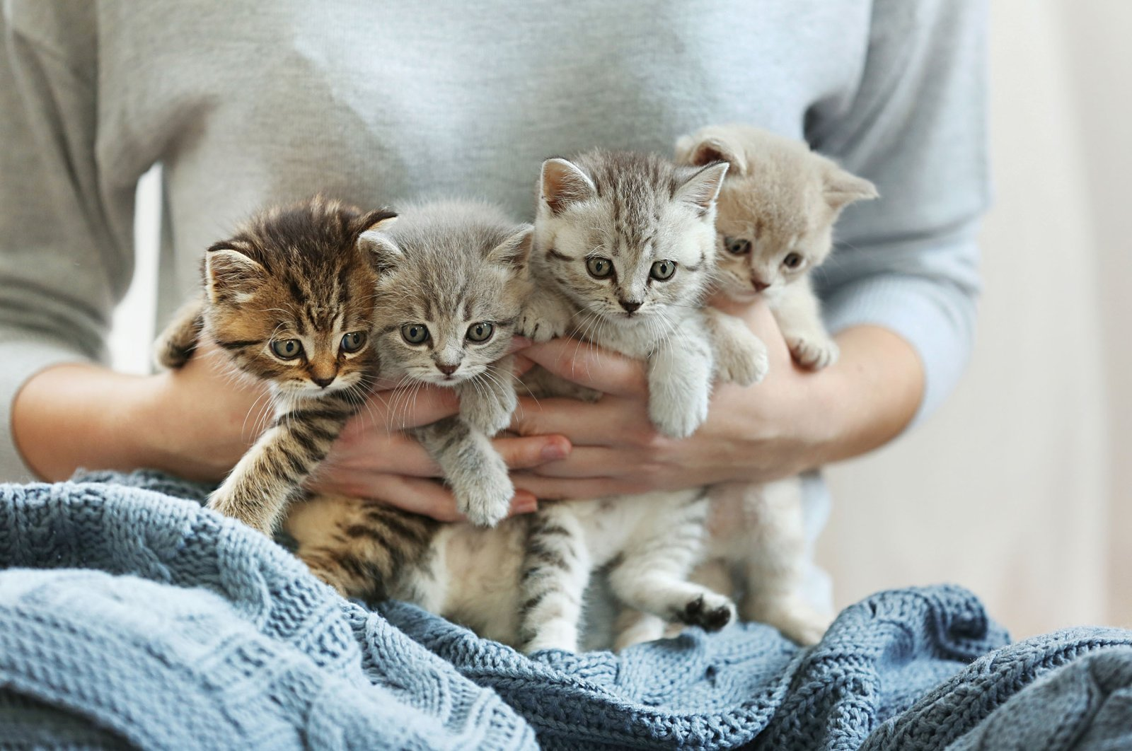 A woman holding small cute kittens in this undated file photo. (Shutterstock File Photo)