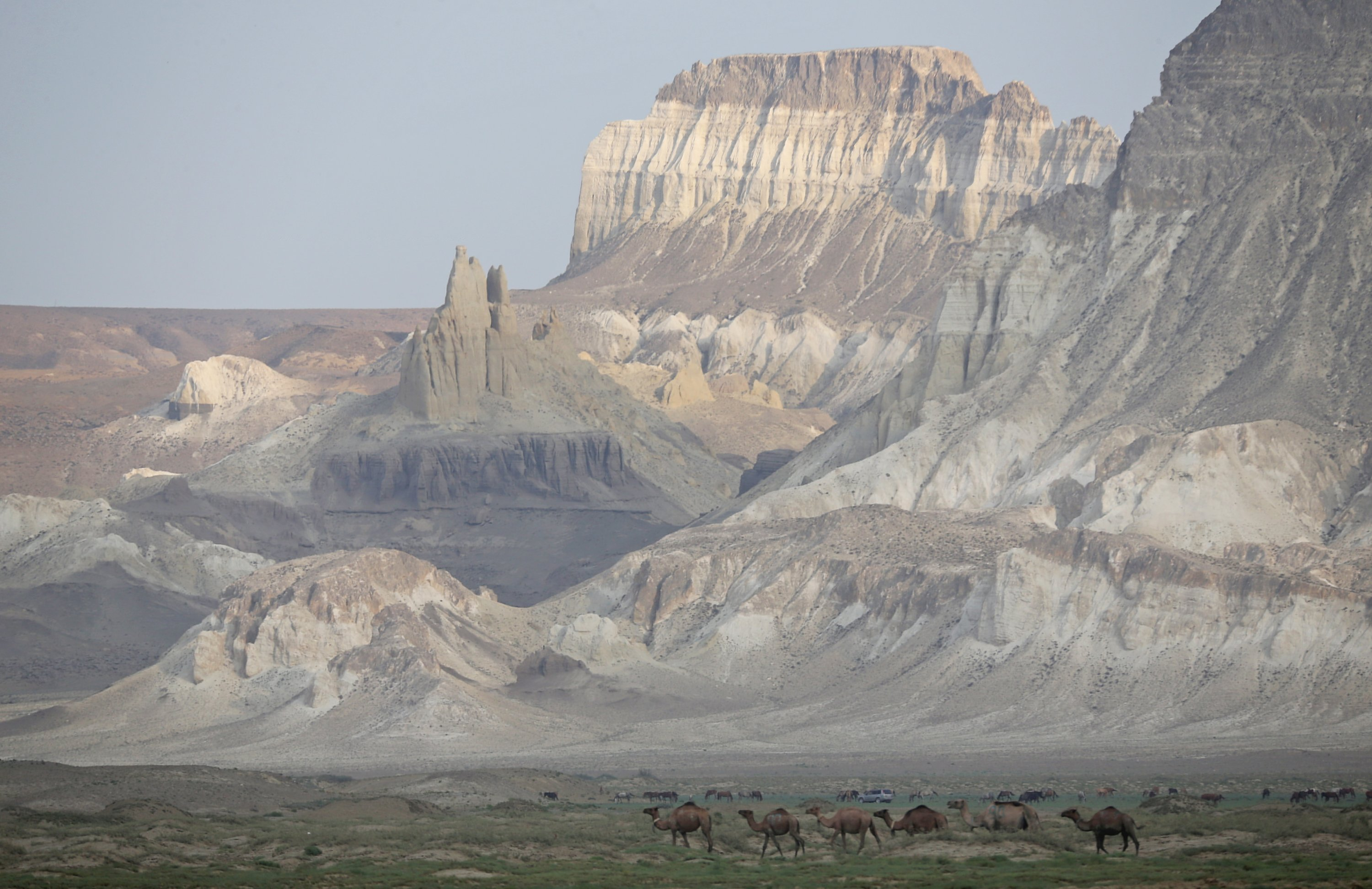 Camels graze in the Airakty Castle Valley amid severe drought in Mangistau Region, Kazakhstan, on July 27, 2021. (Reuters Photo)