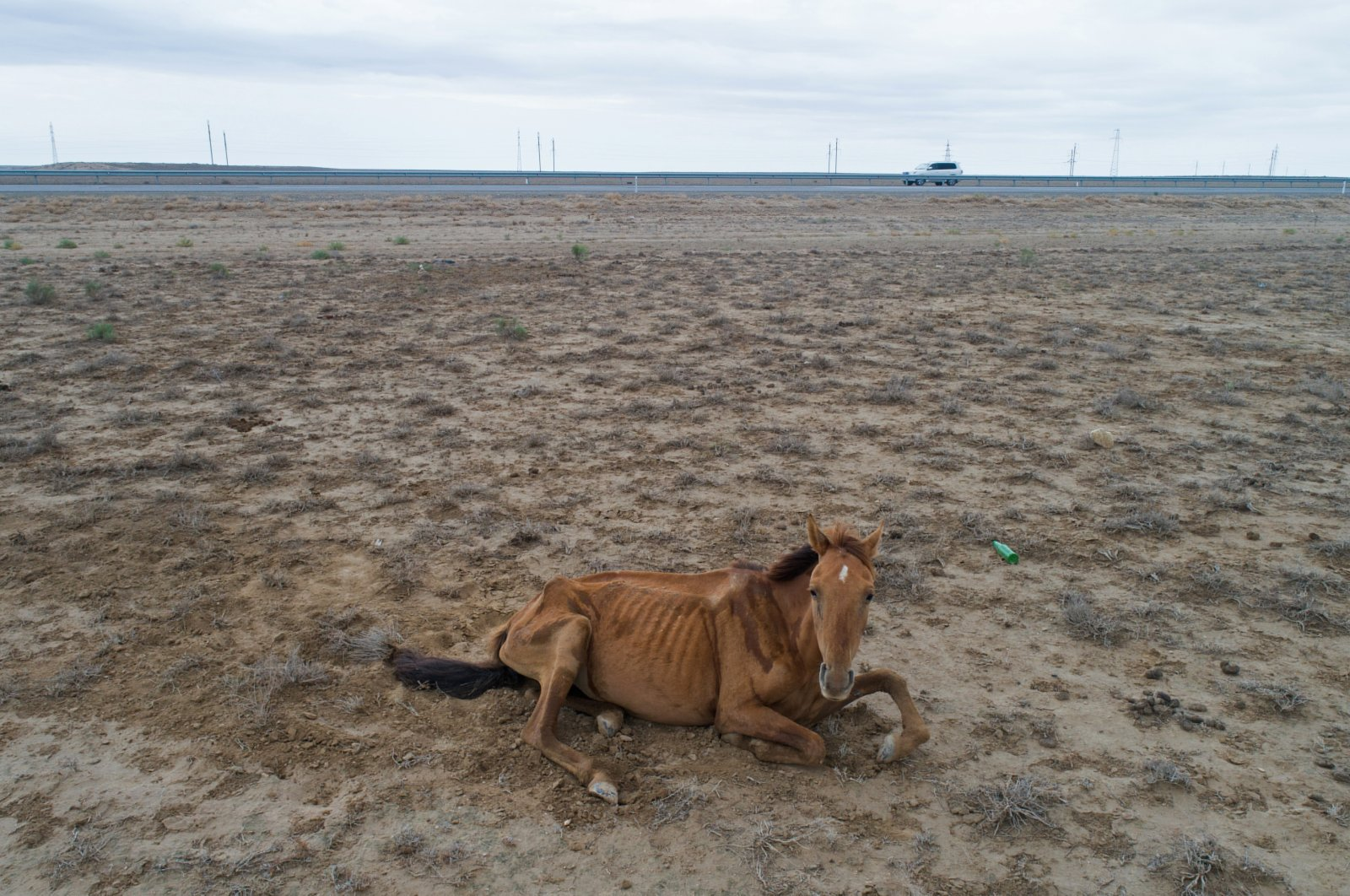 An emaciated horse lies by the road outside the town of Munayshi amid severe drought in Mangistau Region, Kazakhstan, on July 28, 2021. (Reuters Photo)