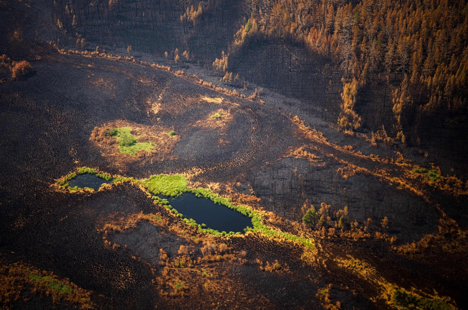 A burned forest at Gorny Ulus area west of Yakutsk, in the Republic of Sakha, Siberia, July 27, 2021. (AFP Photo)