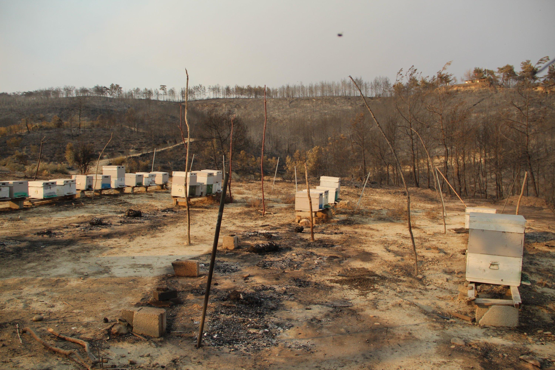 Beehives that managed to survive wildfires in Kalemler village of Manavgat, Antalya, southern Turkey, Aug. 7, 2021. (IHA Photo)