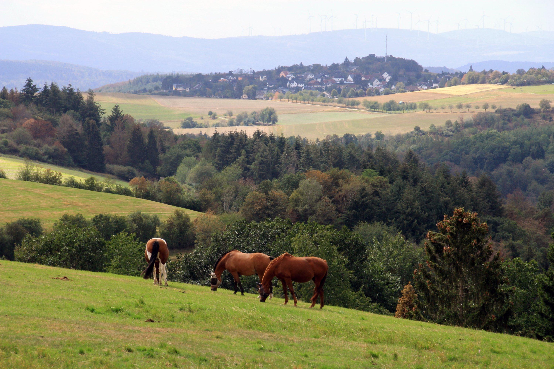Idyllic Wisperland: This view is offered on the Wisper-Gefluester circular trail. (DPA Photo)