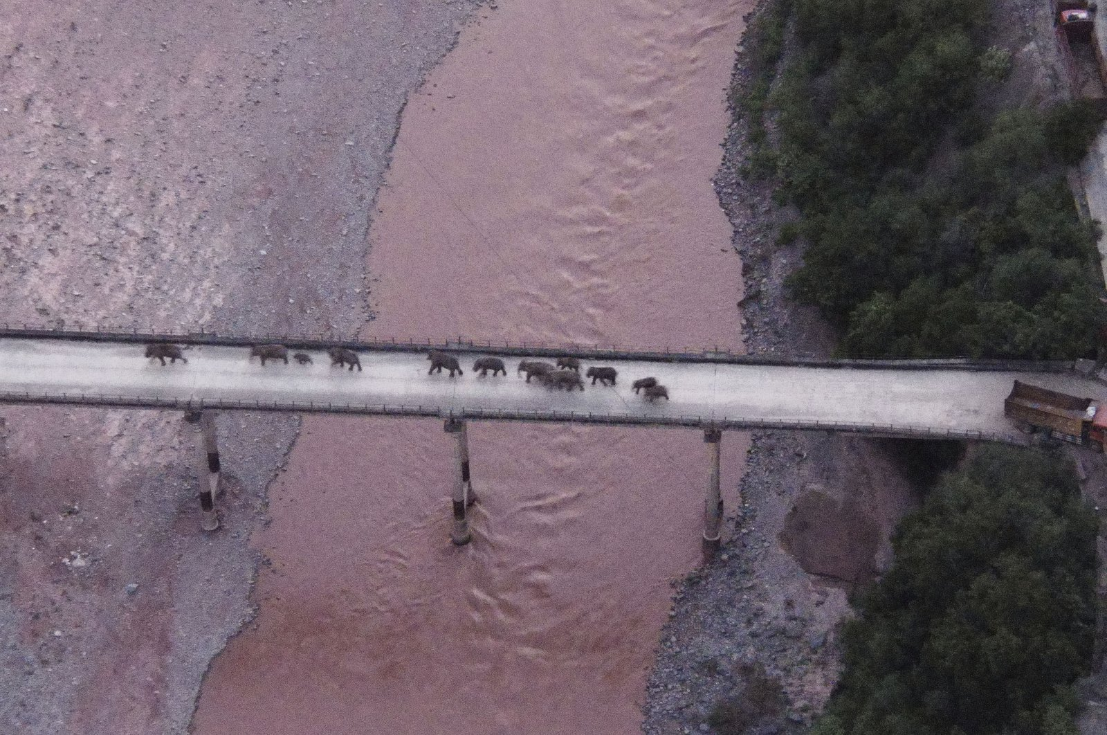 In this photo released by the Yunnan Provincial Command Center for the Safety and Monitoring of North Migrating Asian Elephants, a herd of wandering elephants cross a river using a highway near Yuxi city, Yuanjiang county in southwestern China's Yunnan Province Sunday, Aug. 8, 2021.  (Yunnan Provincial Command Center for the Safety and Monitoring of North Migrating Asian Elephants via AP)