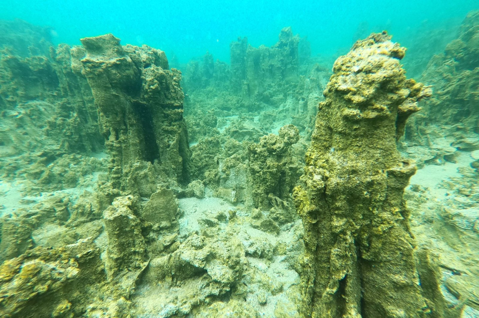 New microbialites different in structure and shape compared to previous discoveries have been found in Turkey's eastern Lake Van. (AA Photo)