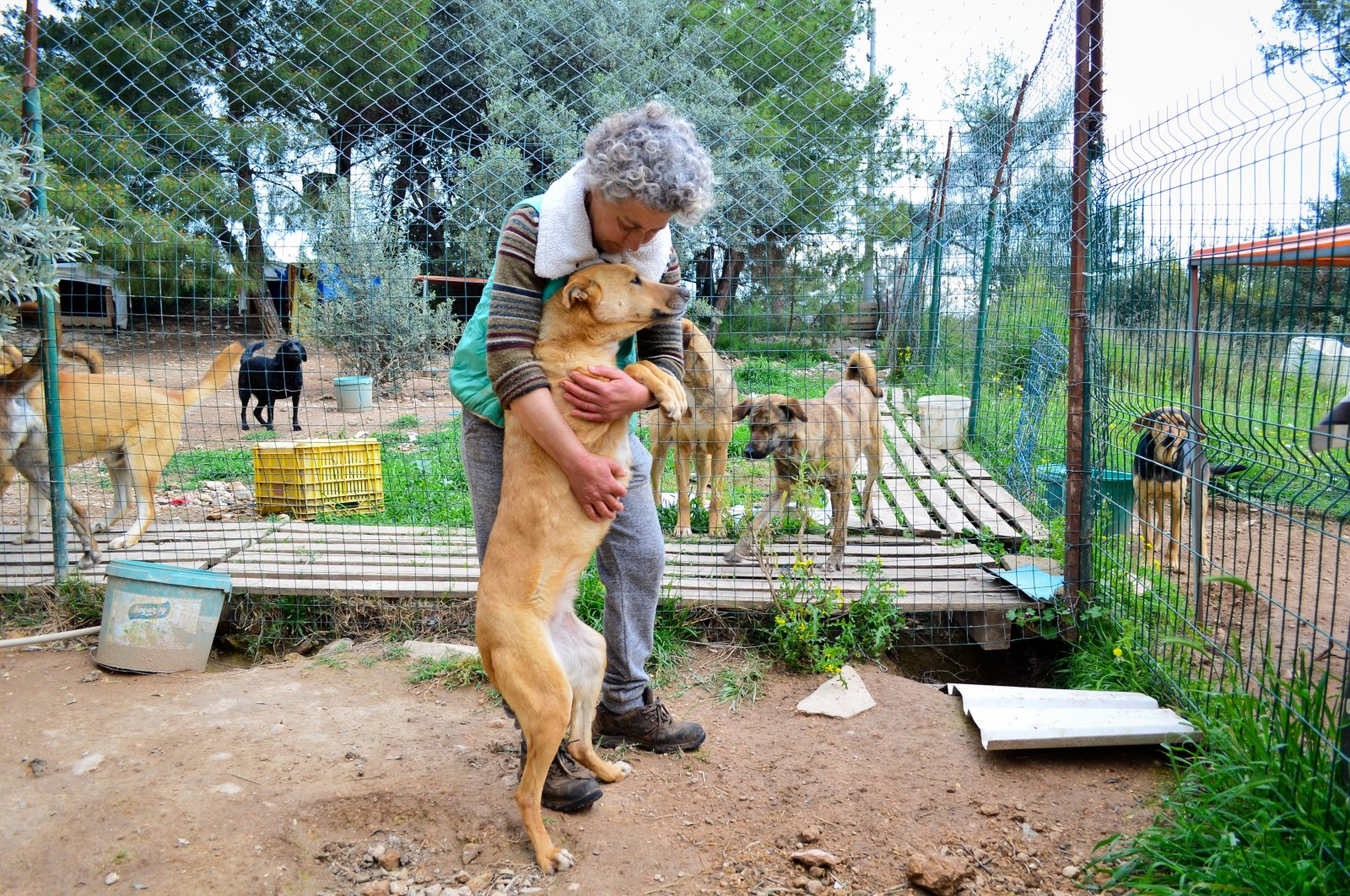 Mihriban Mammadova embraces a dog she cares for in her animal shelter, in Mersin, southern Turkey, Aug. 10, 2021. (AA PHOTO)