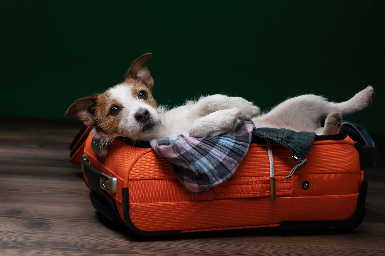 Traveling with a cat or dog sounds like fun, but it requires a large amount of preparation, whether it's by road or by air. (Shutterstock Photo)