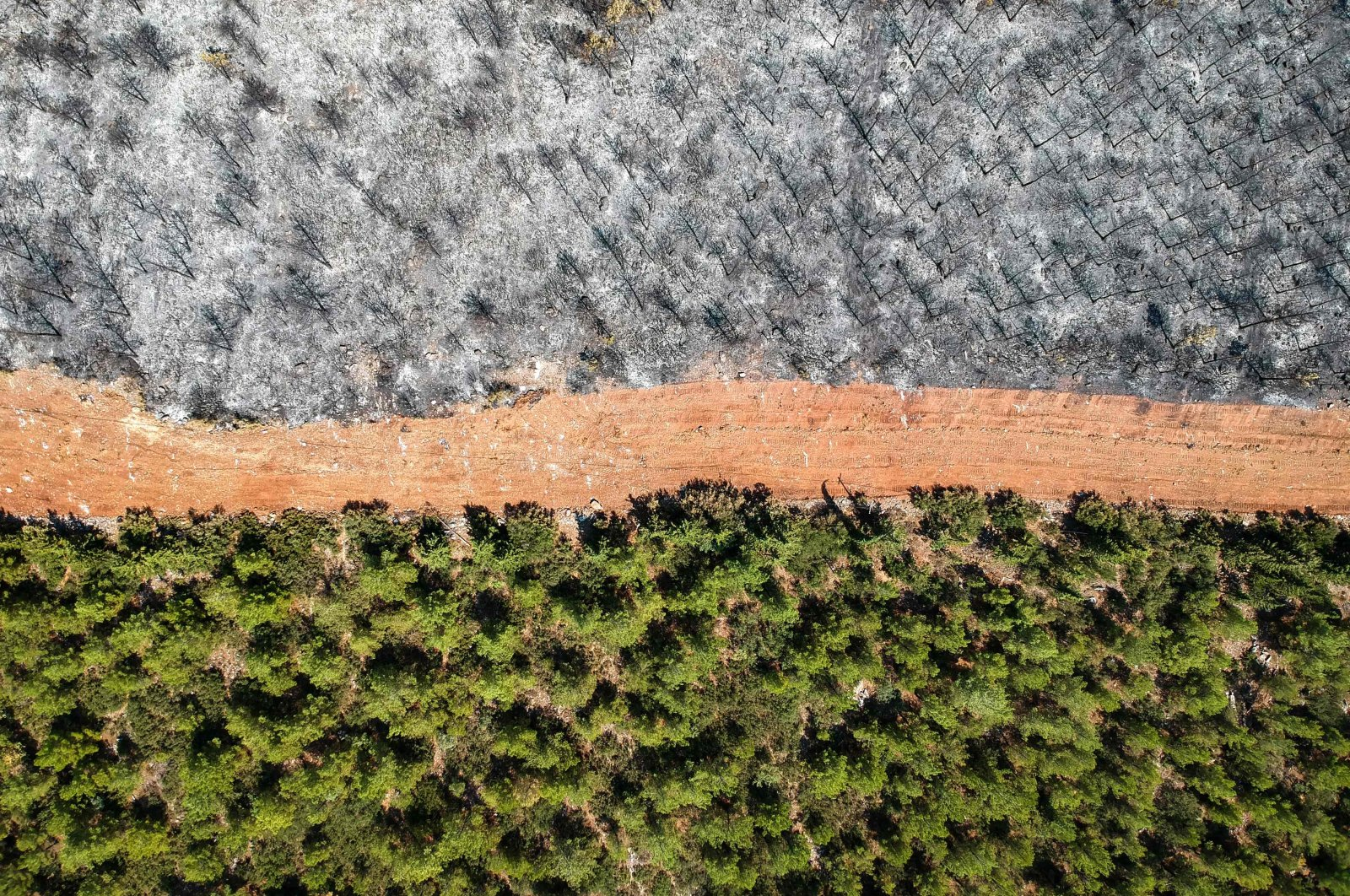 An aerial picture of a track separating burnt trees from a lush, untouched forest in Muğla, as the country struggles against its deadliest wildfires in decades, Muğla, Turkey, on Aug. 7, 2021. (AFP Photo)