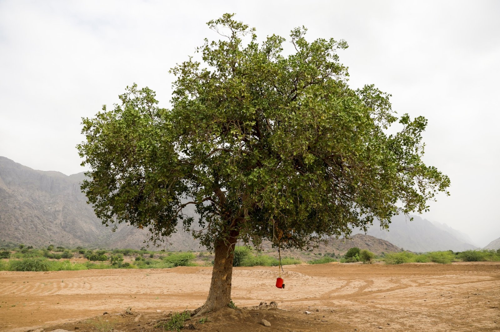 Free drinking water is hung on a tree in Khamis Banisaad district of al-Mahweet province, Yemen, June 23, 2021. (Reuters Photo)