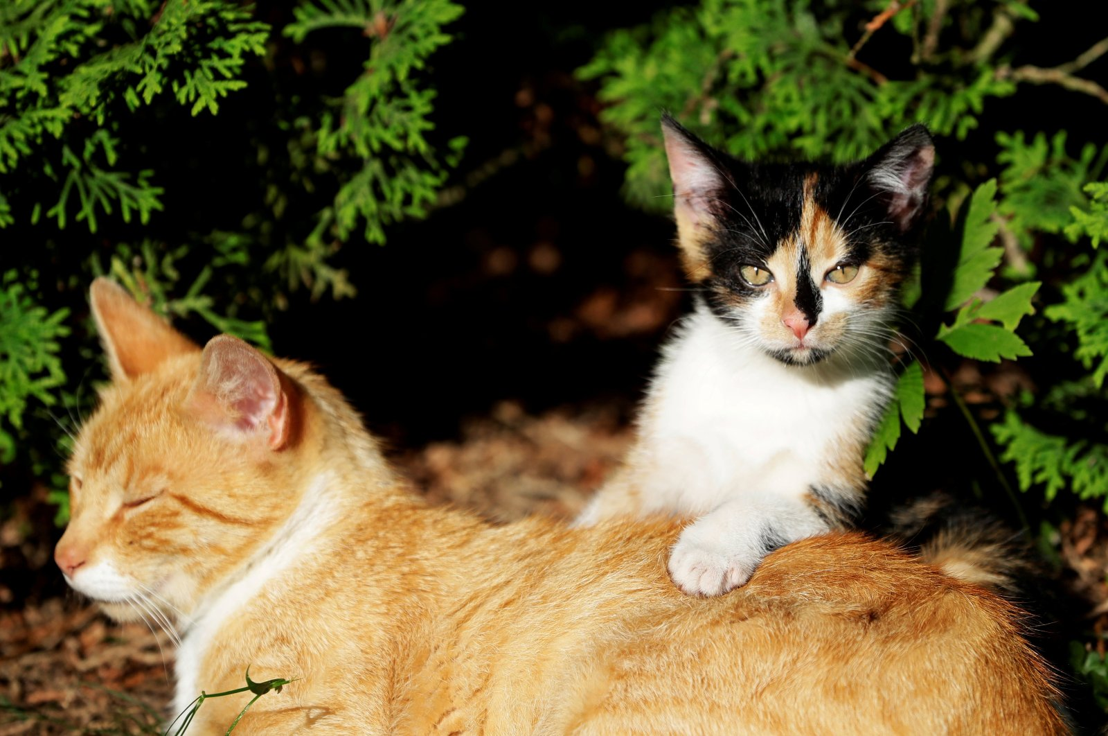 A cat and a kitten are seen in the village of Krompach near the town of Cvikov, Czech Republic, July 11, 2020. (Reuters Photo)