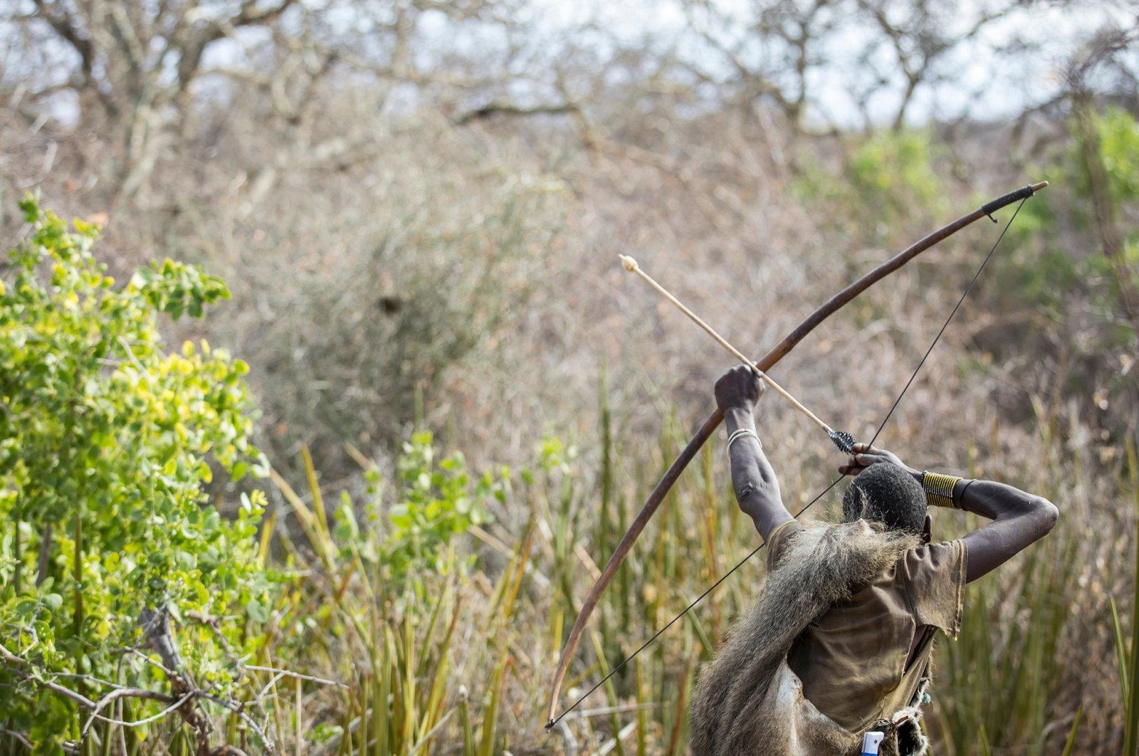 A Hadza hunter draws his bow as he prepares to shoot an arrowin northern Tanzania. (Shutterstock Photo)
