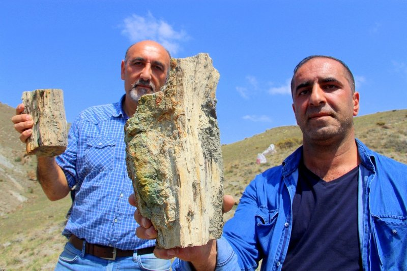 Nearly 160M-year-old fossils provide insight into Turkey's climate in the period. (IHA Photo)