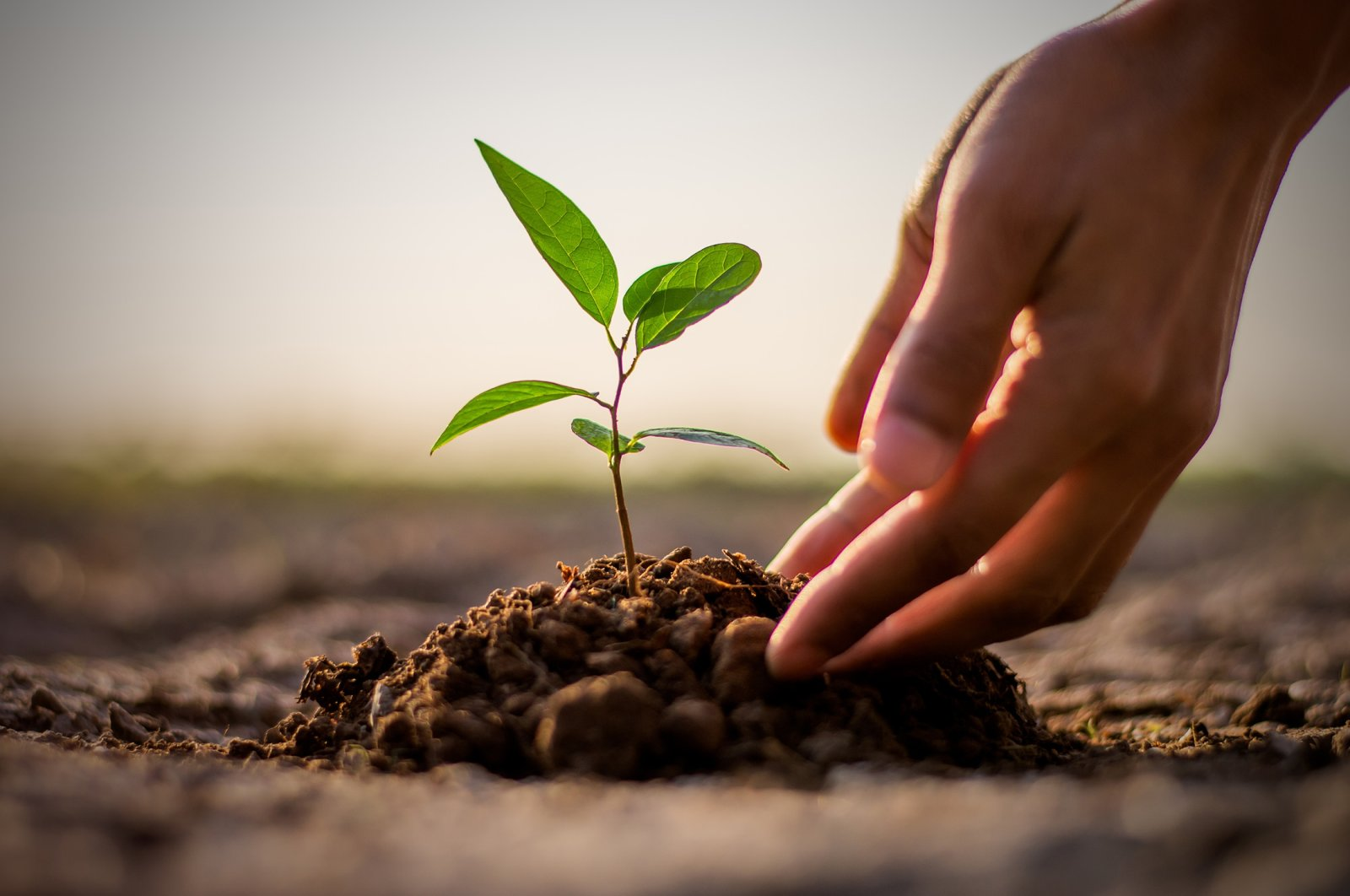This illustration photo depicts a seedling being carefully planted. (Shutterstock Photo)