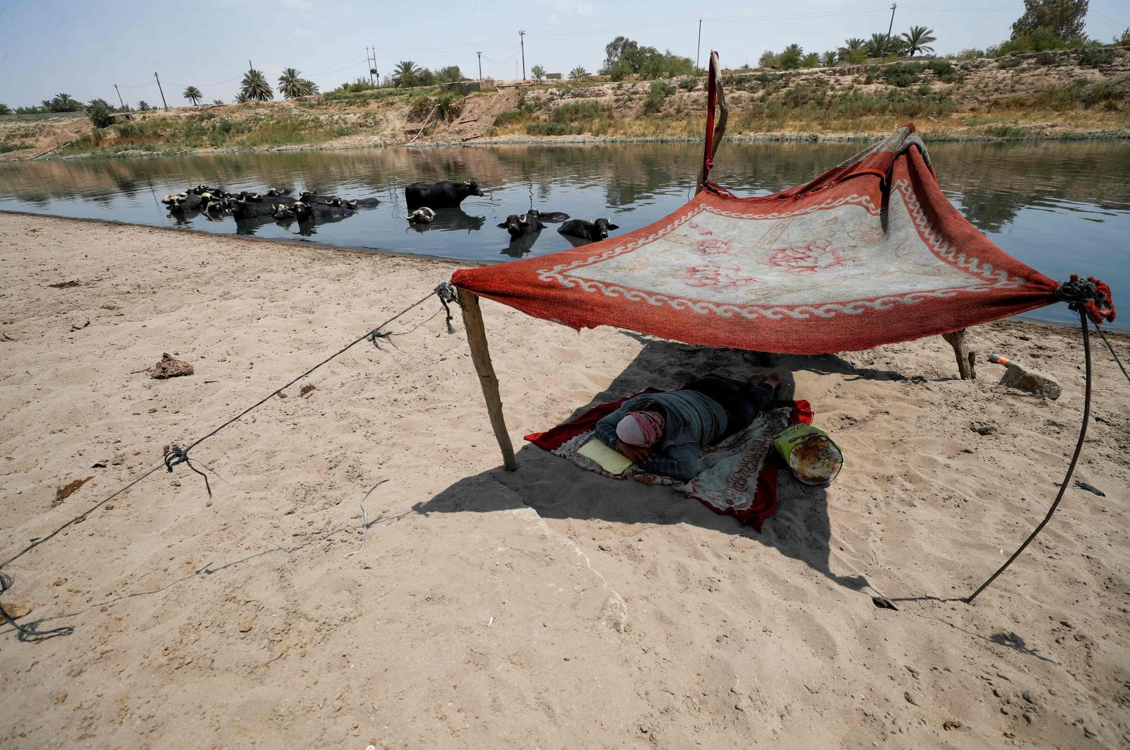 An Iraqi herder sleeps as his buffalo cool off in the Diyala River in the Faziliah district, east of Baghdad, Iraq, Aug. 2, 2021.  (AFP Photo)