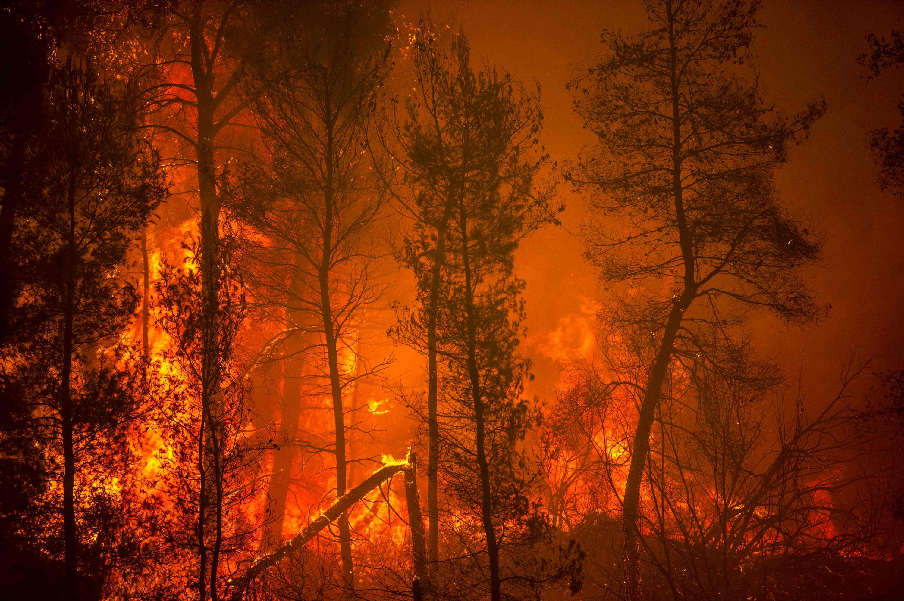 A blaze engulfs trees in its path as forest fires approach the village of Pefki on Evia (Euboea), Greece's second-largest island, on Aug. 8, 2021. (AFP Photo)