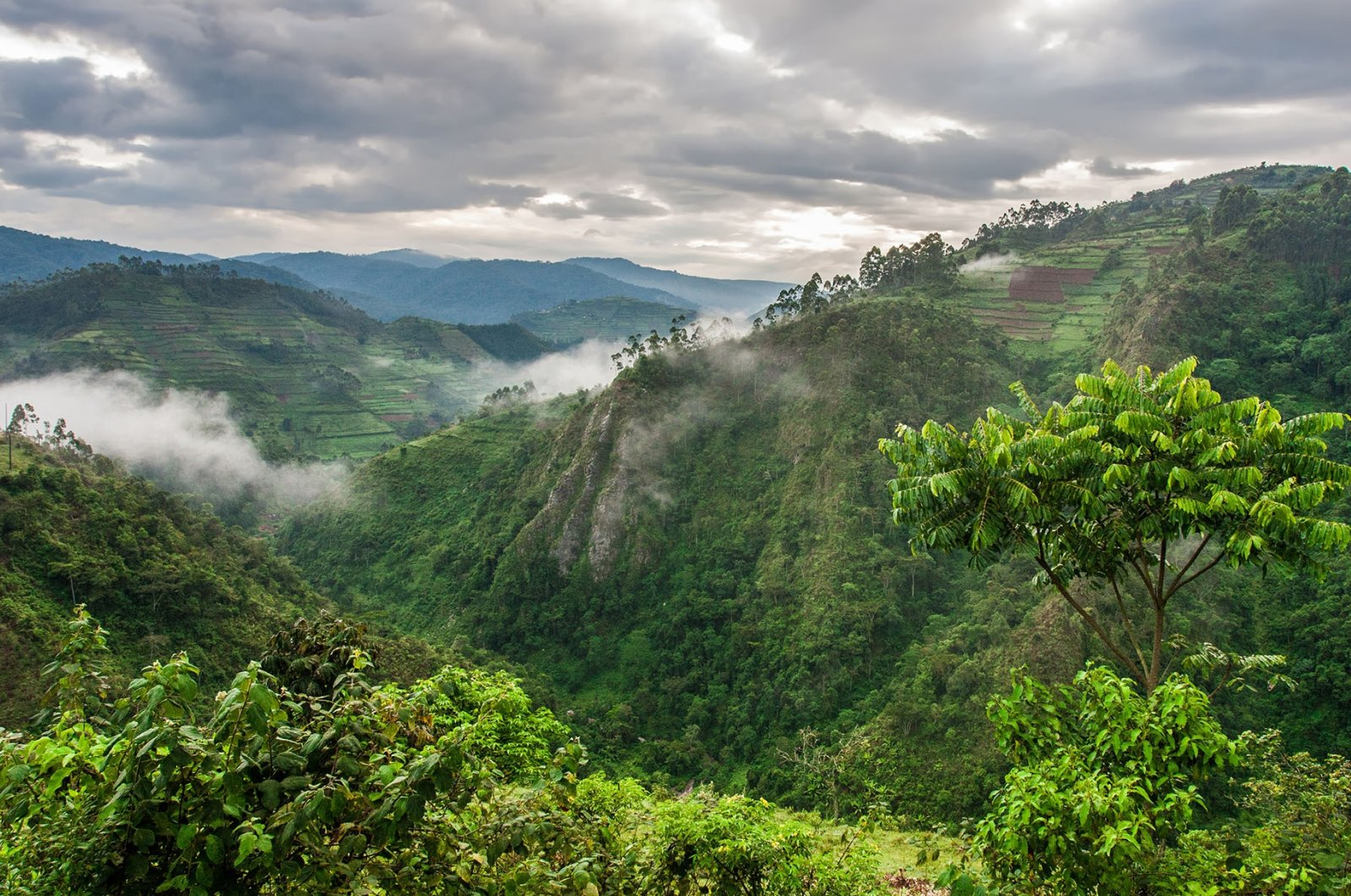 The BwindiImpenetrable Forest National Park can be seen at theborders of Uganda, Democratic Republic of Congo and Rwanda. (Shutterstock Photo)