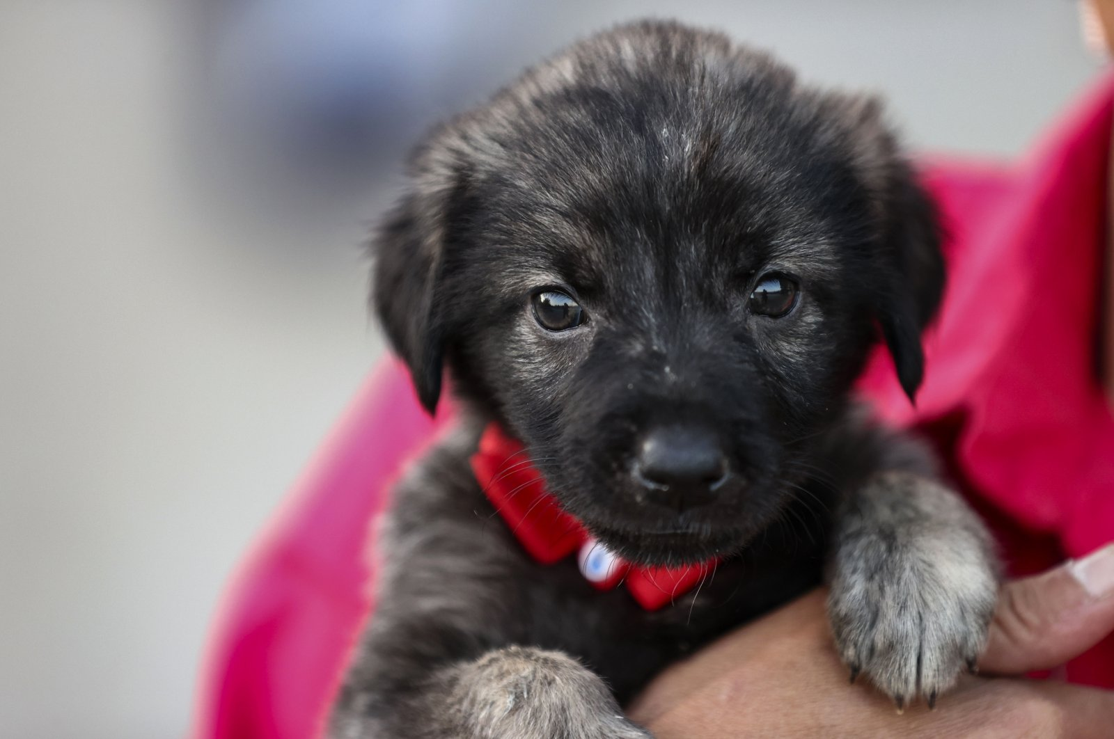 A staff member at the animal shelter holds a puppy brought to her after the floods, in the capital Ankara, Turkey, Aug. 26, 2021. (AA PHOTO)