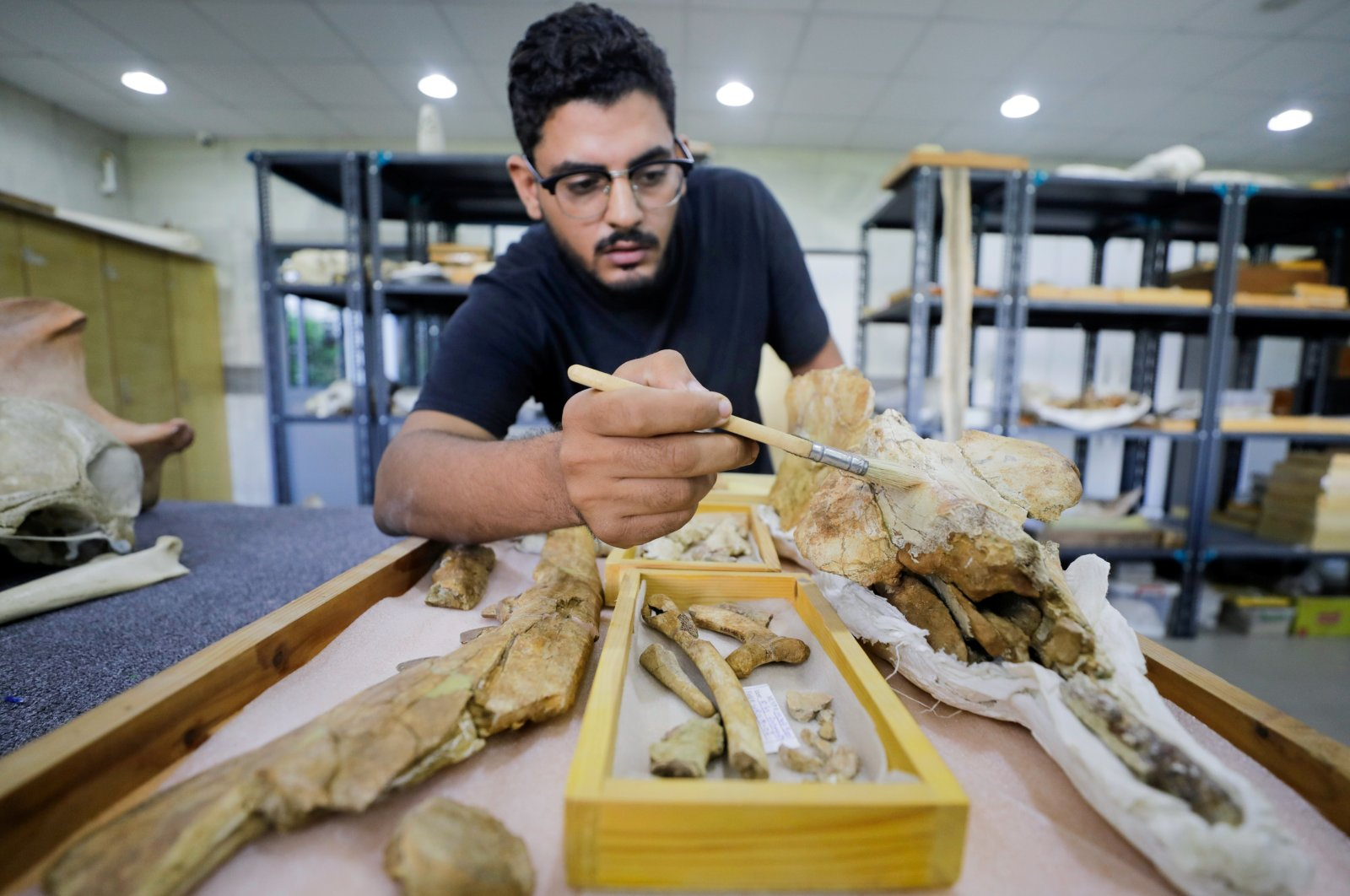 """Abdullah Gohar, a researcher at El Mansoura, university works on renovating the 43 million-year-old fossil of a previously unknown four-legged amphibious whale called """"Phiomicetus Anubis"""", that helps trace the transition of whales from land to sea, which were discovered in the Fayum Depression in the Western Desert of Egypt, near the town of El Mansoura, north of Cairo, Egypt August 26, 2021. (Reuters Photo)"""