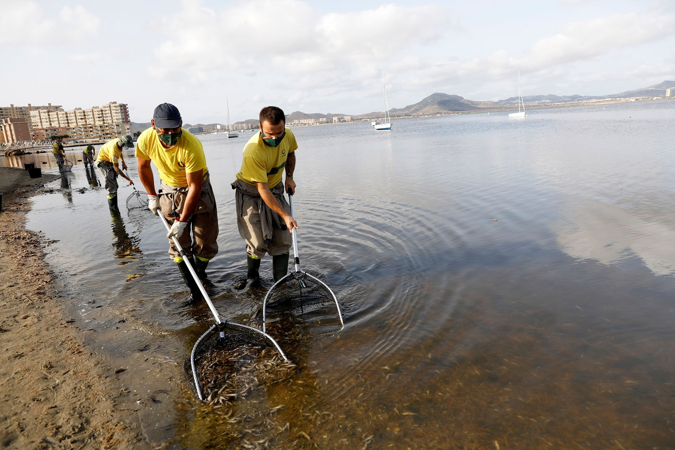 Municipal workers try to clean the beach of dead fish that continue to appear for the fourth day in La Manga del Mar Menor, Murcia, Spain, Aug. 21, 2021. (Reuters Photo)