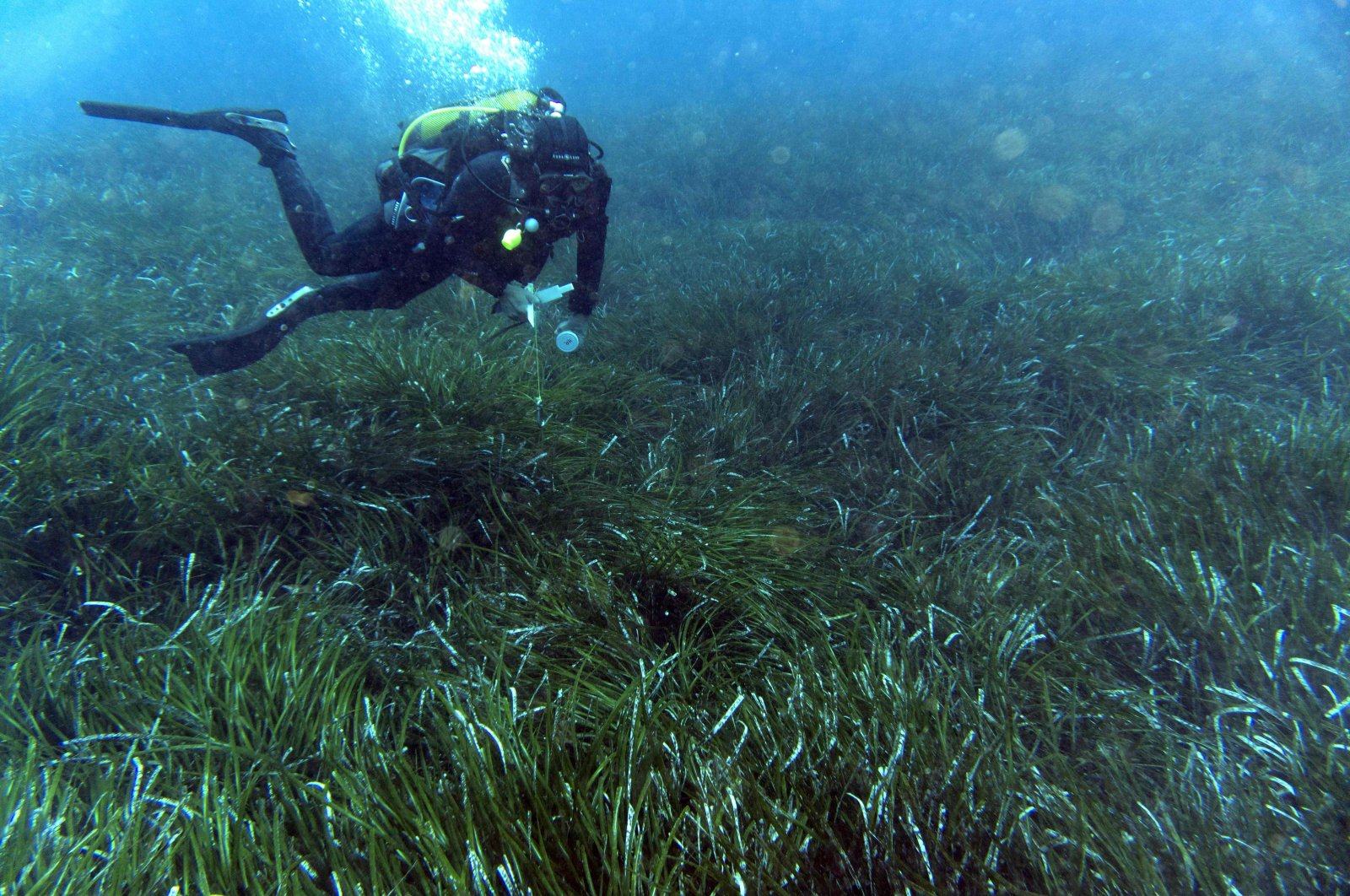 A diver swims over posidonia oceanica meadows in the Mediterranean Sea near Cannes, France, May 20, 2019. (AFP File Photo)