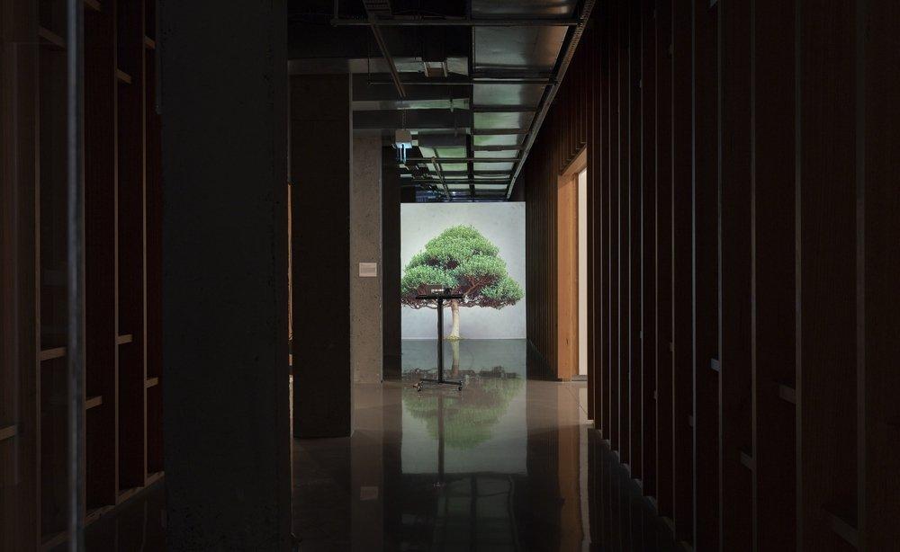 """Tree Story,""2021, installation. (Courtesy of Protocinema)"