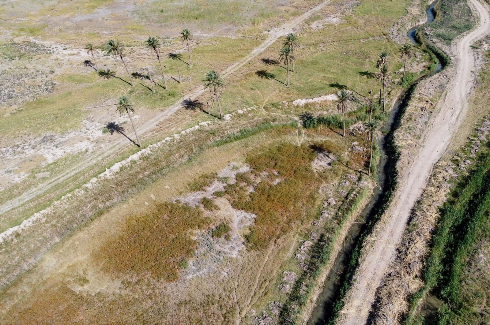 A general view of an orchard that dried out due to lack of water in Diyala province, Iraq, June 27, 2021. (Reuters Photo)