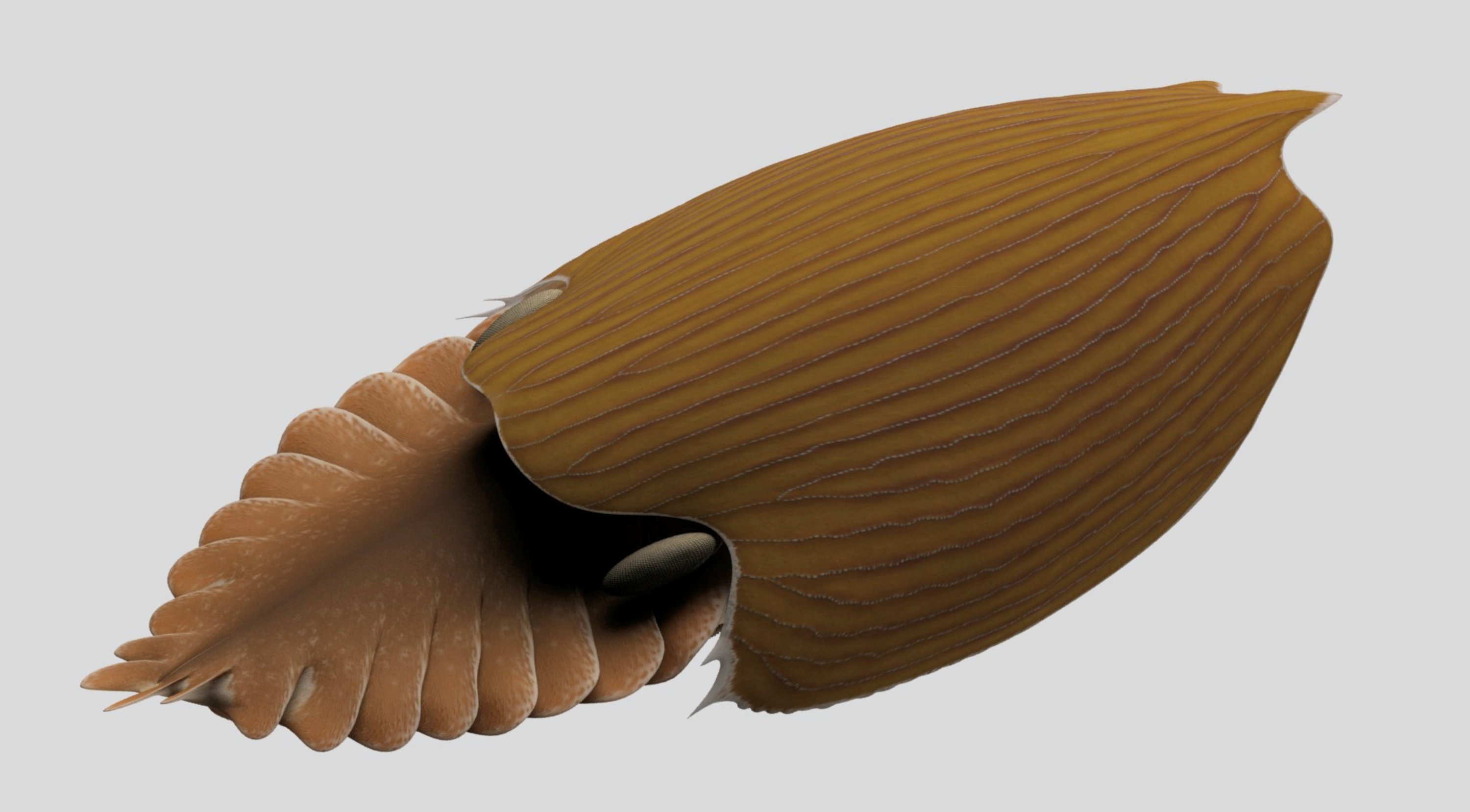 A reconstruction viewed from the side of the Cambrian Period arthropod Titanokorys gaines. (Reuters Photo)