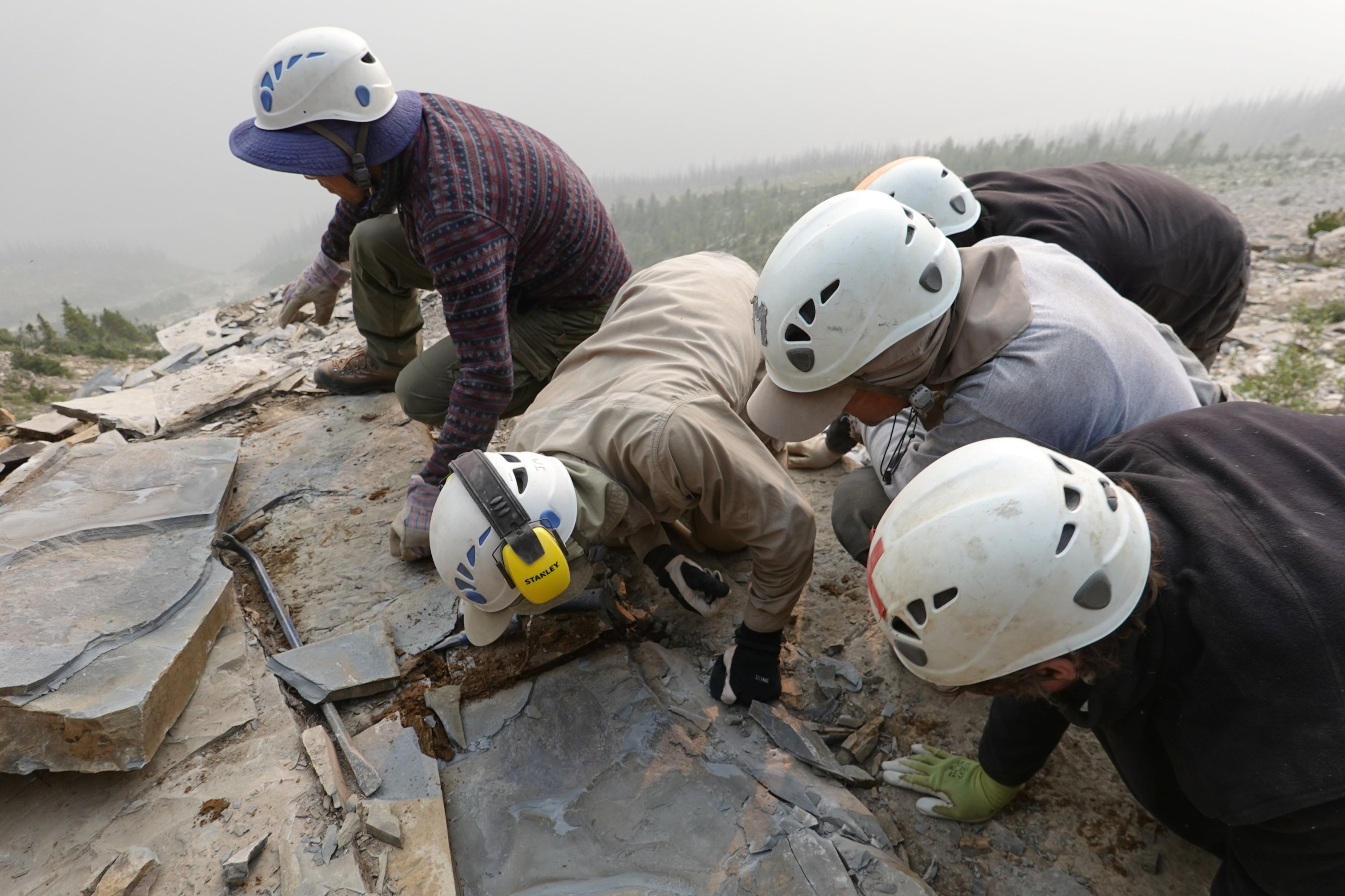 Members of the Royal Ontario Museum fieldwork crew extract a shale slab containing a fossil of Titanokorys gainesi during the 2018 fieldwork season, at the Kootenay National Park, British Columbia, Canada, 2018. (Reuters Photo)
