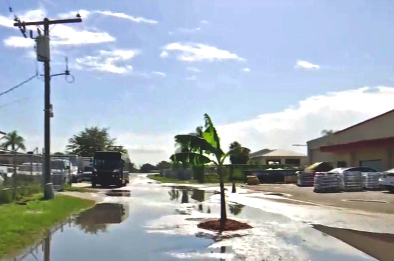 This screengrab taken from a Wink News report shows the banana tree planted in the pothole in Florida's Fort Myers, U.S., Sept. 7, 2021. (Screengrab/Wink News)
