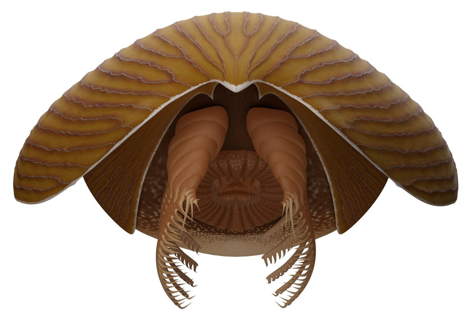 A reconstruction viewed from the front of the Cambrian Period arthropod Titanokorys gaines. (Reuters Photo)