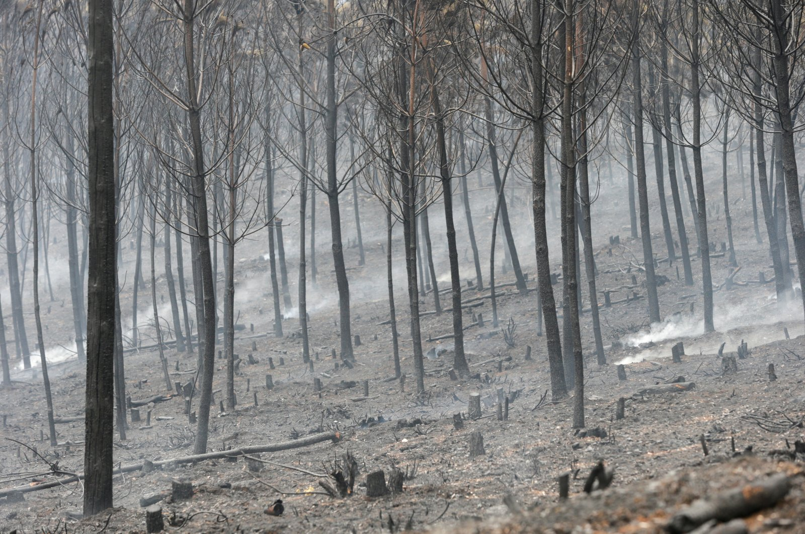 Burnt trees are seen after a wildfire near Ribas de Sil, northwestern Spain, Sept. 7, 2021. (Reuters Photo)