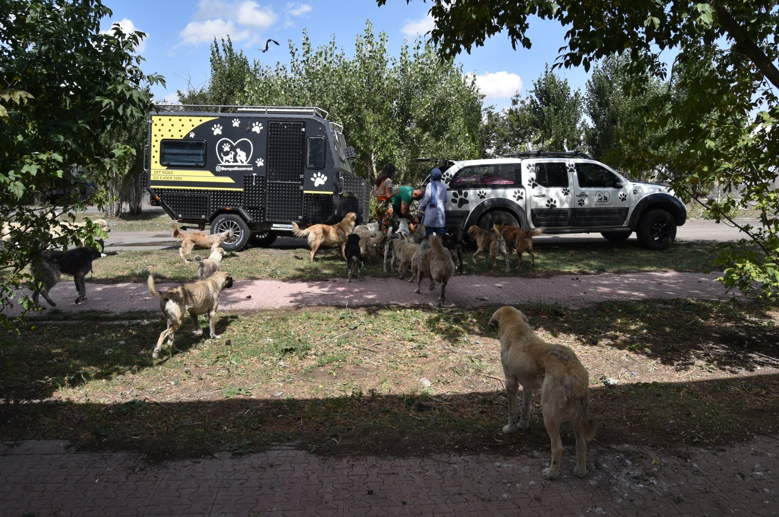 Dogs surround the trailer during food delivery, in Kars, eastern Turkey, Sept. 10, 2021. (AA PHOTO)