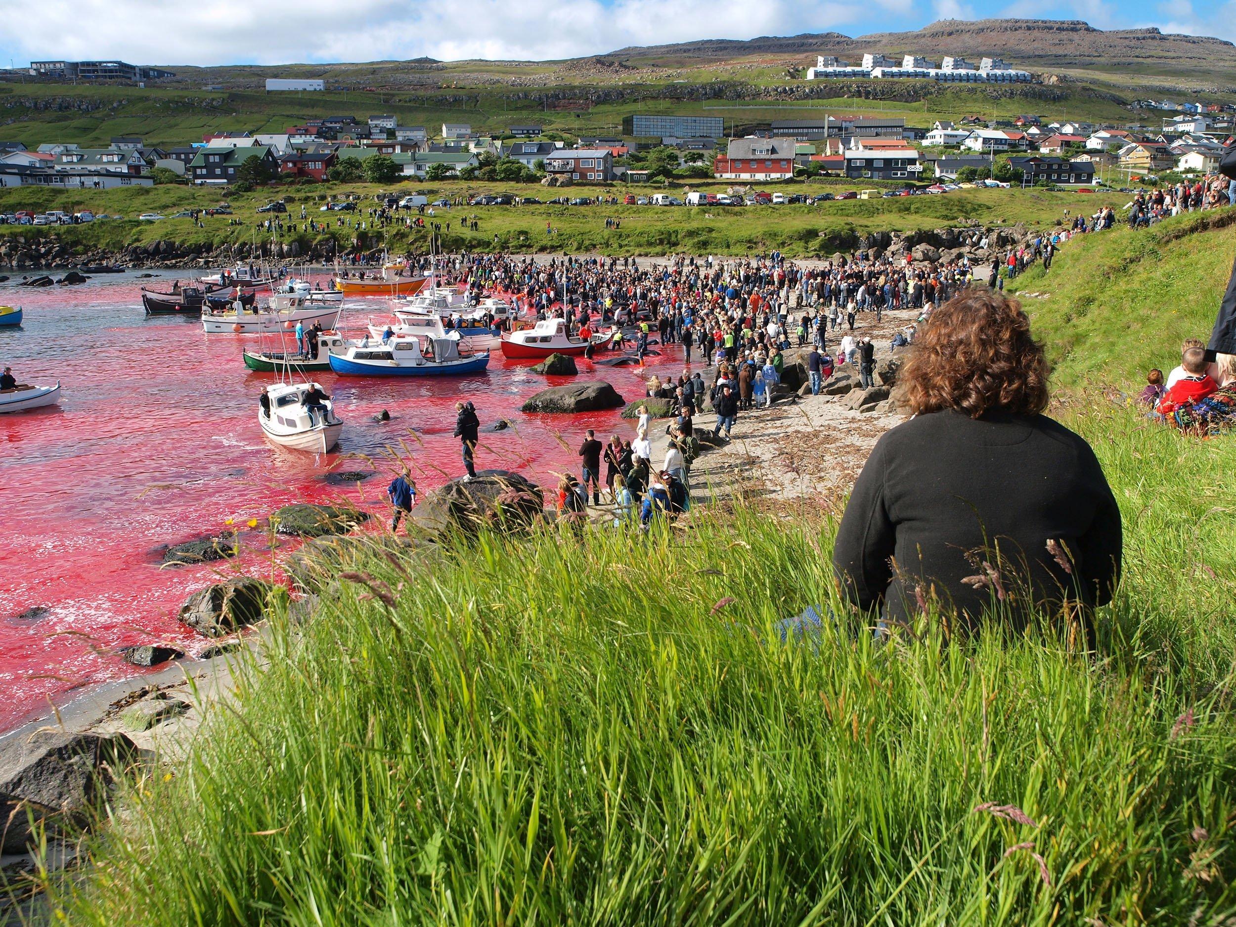 Faroe Island | Grindadrap