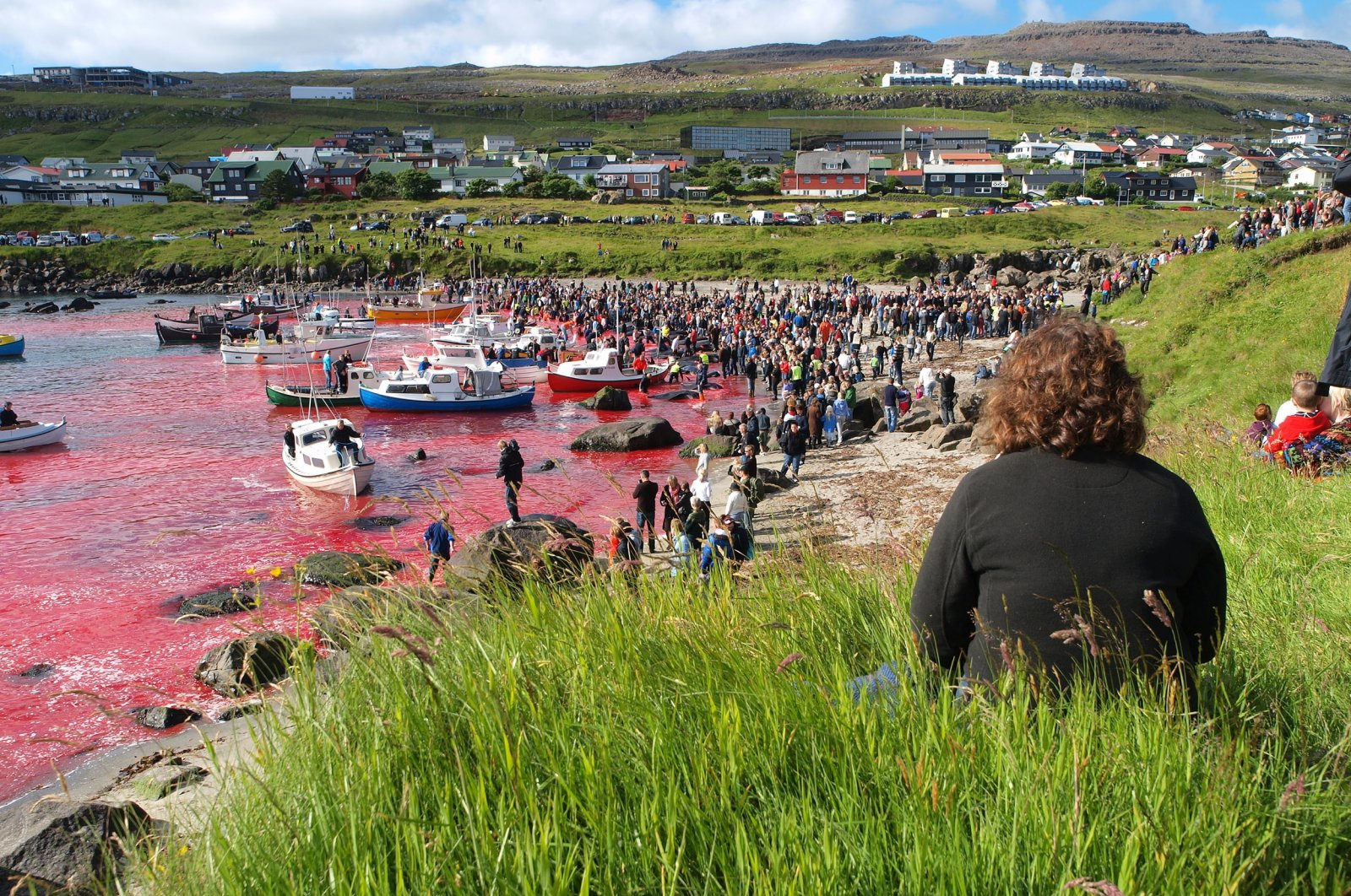 People participate in the traditional slaughter ofwhite-sided dolphins and pilot whales, in Torshavn, Faroe Islands, July 23, 2010. (Shutterstock Photo)