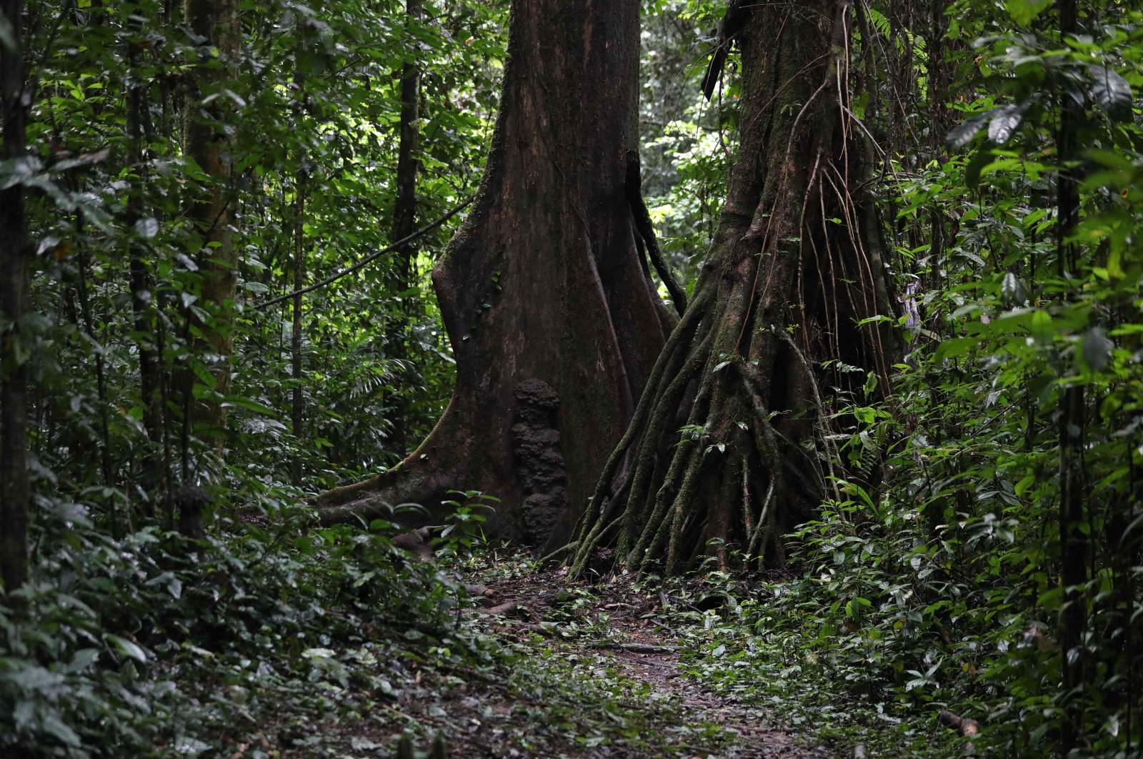 A general view of the Oban Biosphere Reserve, in Calabar, Cross River, Nigeria where UNESCO Chief Audrey Azoulay visited during a tour of the Reserve on Sept. 12, 2021. (AFP Photo)
