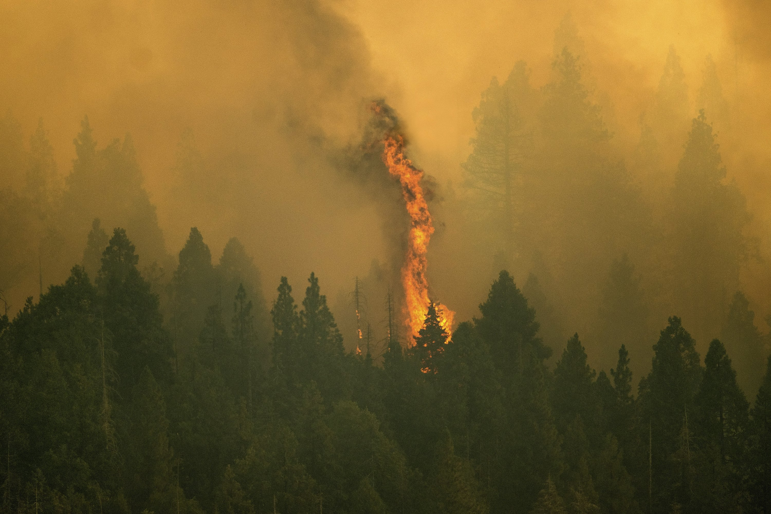 The Windy Fire burns in Sequoia National Forest, California, U.S., Sept. 16, 2021. (AP Photo)