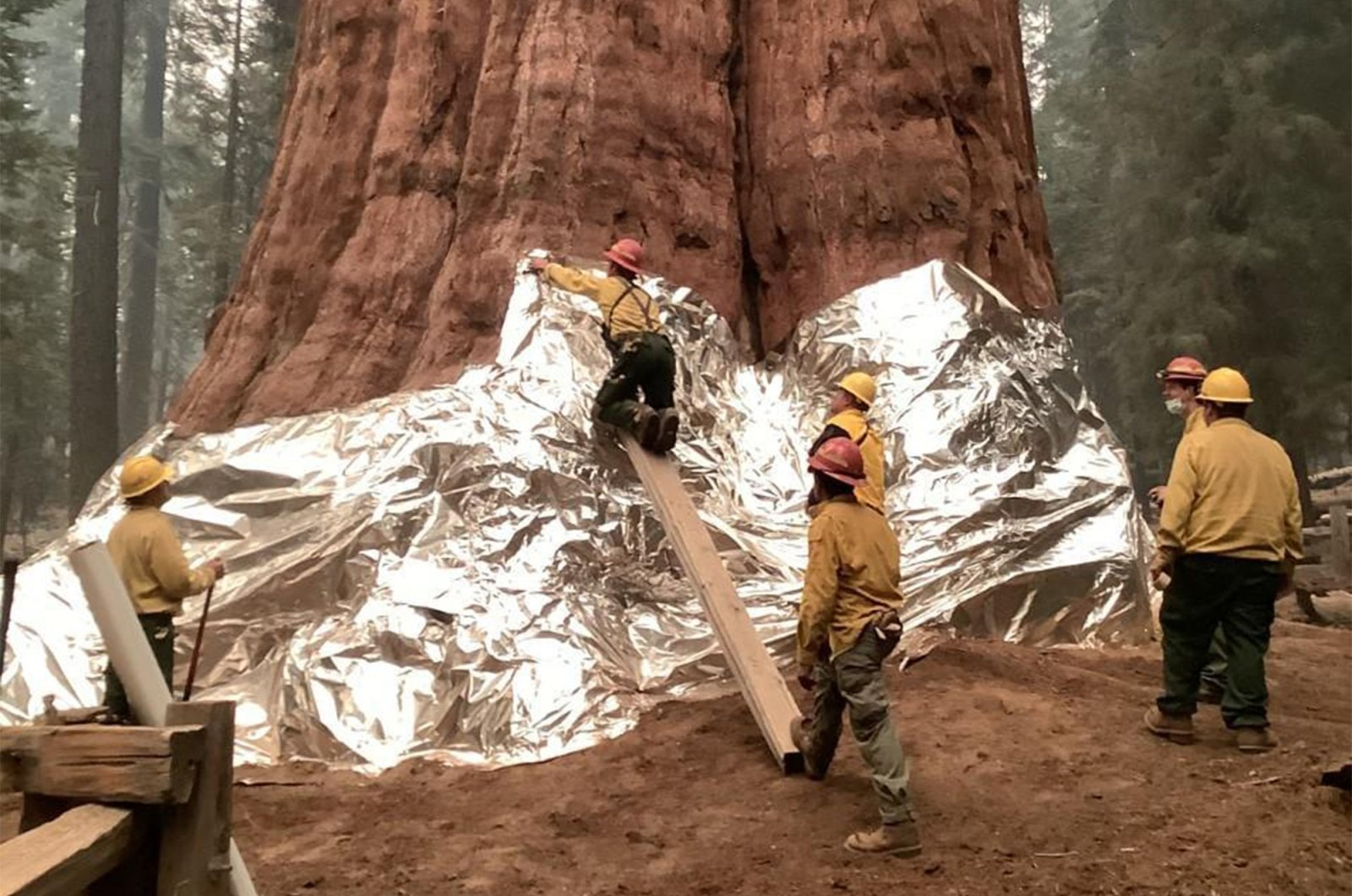 Firefighters wrap the base of the giant sequoia known as General Sherman with a fire-resistant blanket to protect it from the intense heat of approaching wildfires at Sequoia National Forest in California, U.S., Sept. 17, 2021. (National Park Service via AFP)