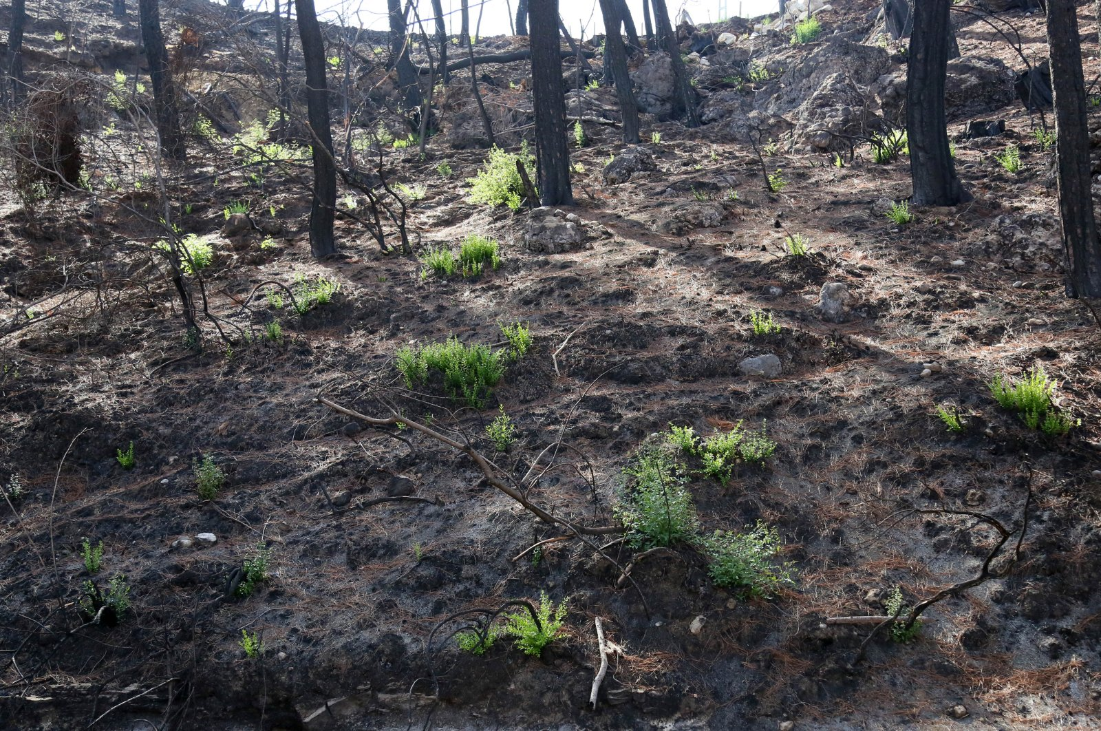A view of plants growing after wildfires were put out in a forest in Manavgat, Antalya, southern Turkey, Sept. 19, 2021. (DHA Photo)