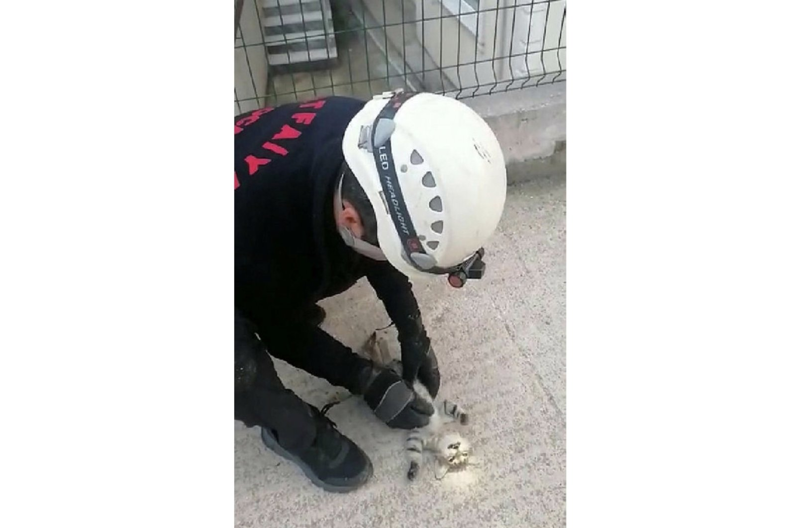 The fireman applies heart massage to a cat whose heart stopped after being stuck in between two buildings in northwestern Turkey's Kocaeli on Sept. 26, 2021 (IHA Photo)