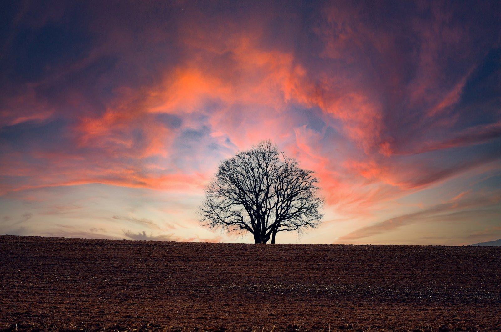 A photo illustration shows a single tree in front of a dramatically illuminated sky. (Shutterstock Photo)