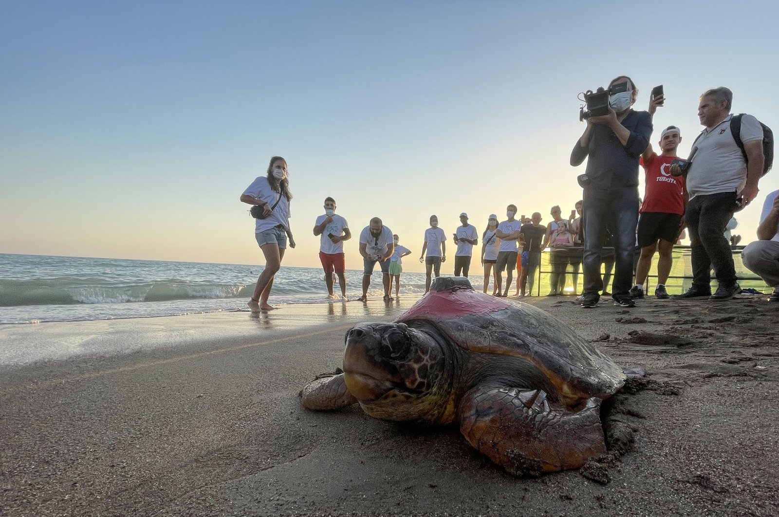 People watch as a loggerhead sea turtle fitted with a tracking device is released, in Antalya, southern Turkey, Sept. 28, 2021. (AA PHOTO)