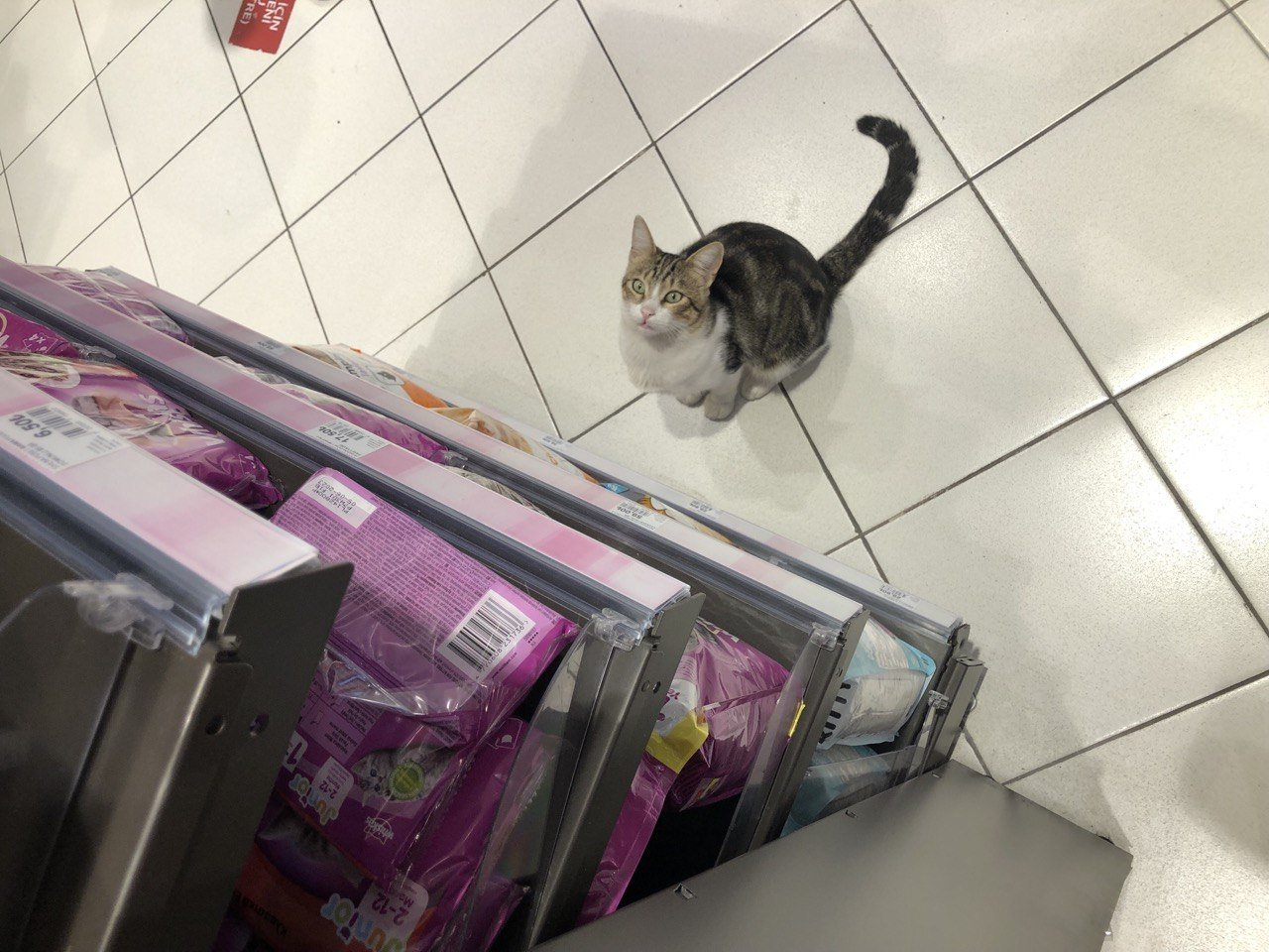 """""""Nokta"""" the street cat waits patiently by the pet food section in a local market to fool sympathetic customers into buying him a quick meal, Kadıköy, Istanbul, Turkey, Oct. 2, 2021. (DHA Photo)"""