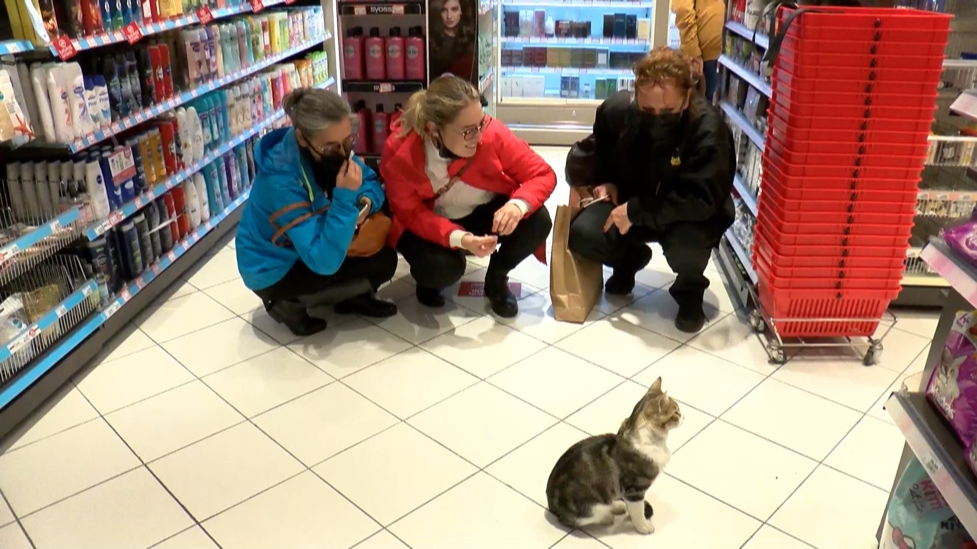 Customers stop by a local market to see 'Nokta' the street cat, Kadıköy, Istanbul, Turkey, Oct. 2, 2021. (DHA Photo)