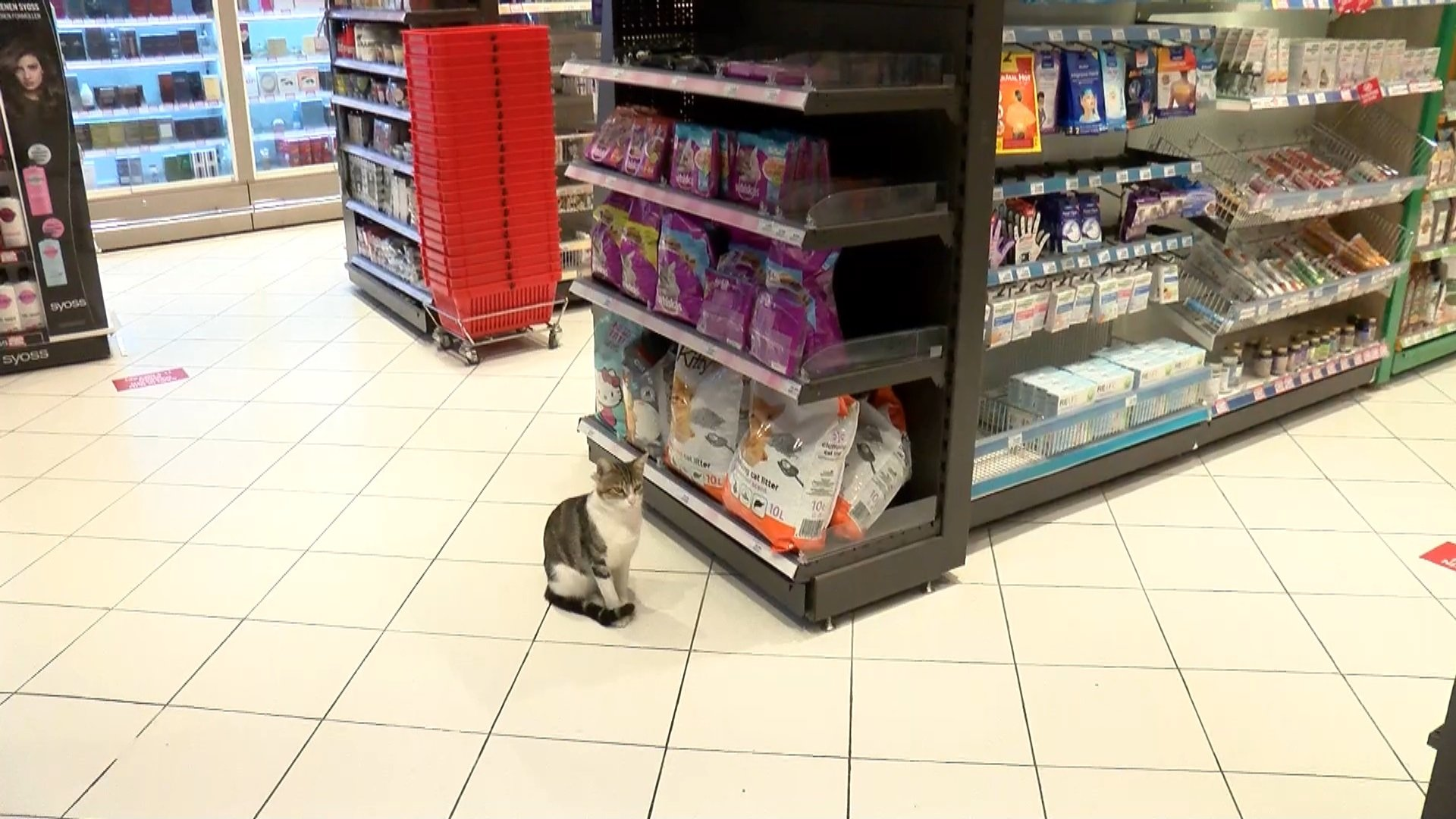 'Nokta' the street cat waits patiently by the pet food section in a local market to fool sympathetic customers into buying him a quick meal, Kadıköy, Istanbul, Turkey, Oct. 2, 2021. (DHA Photo)