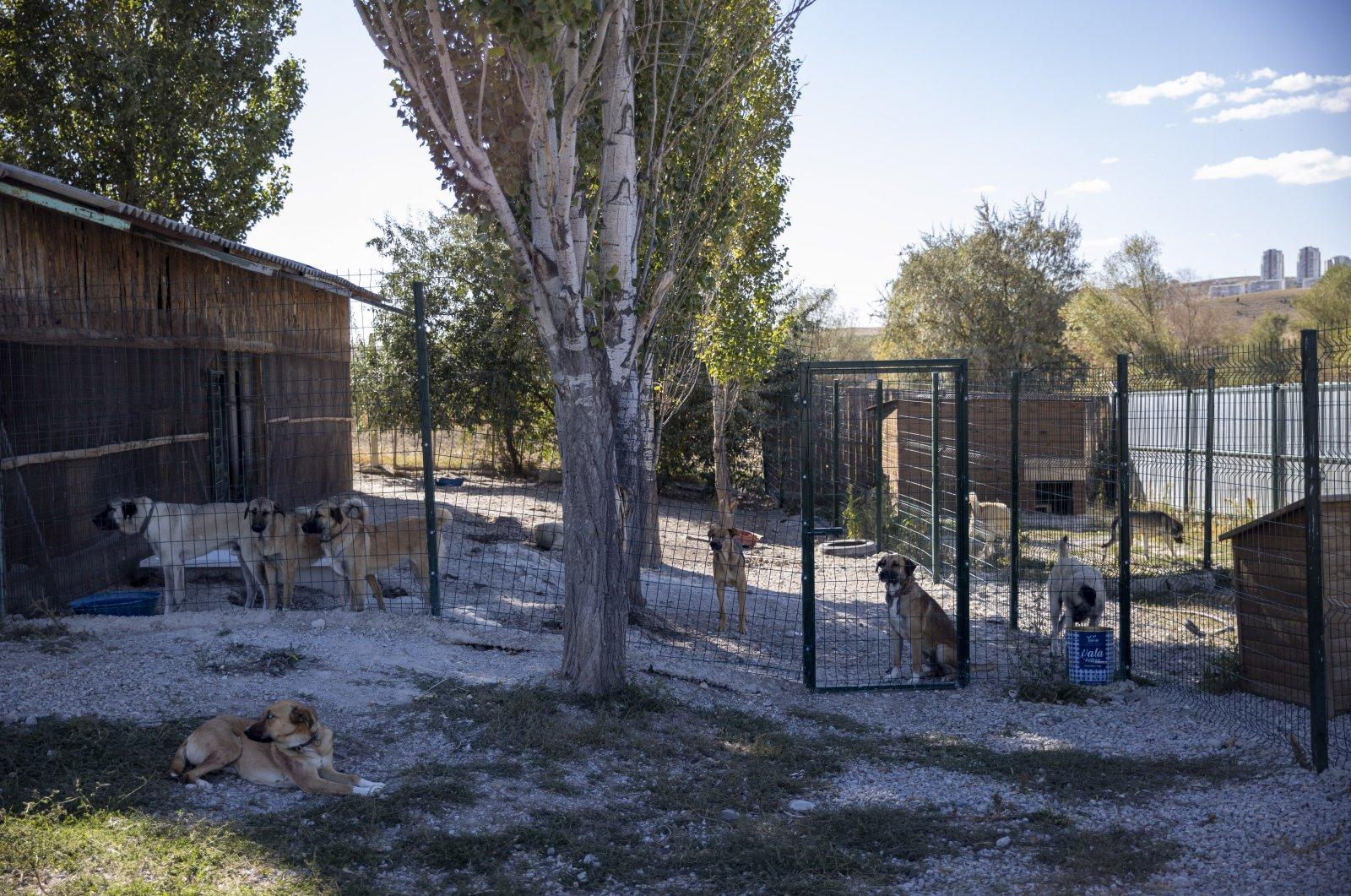 Animals are seen at the shelter built by Patiko in Etimesgut, Ankara, Turkey,  Oct. 3, 2021. (AA Photo)